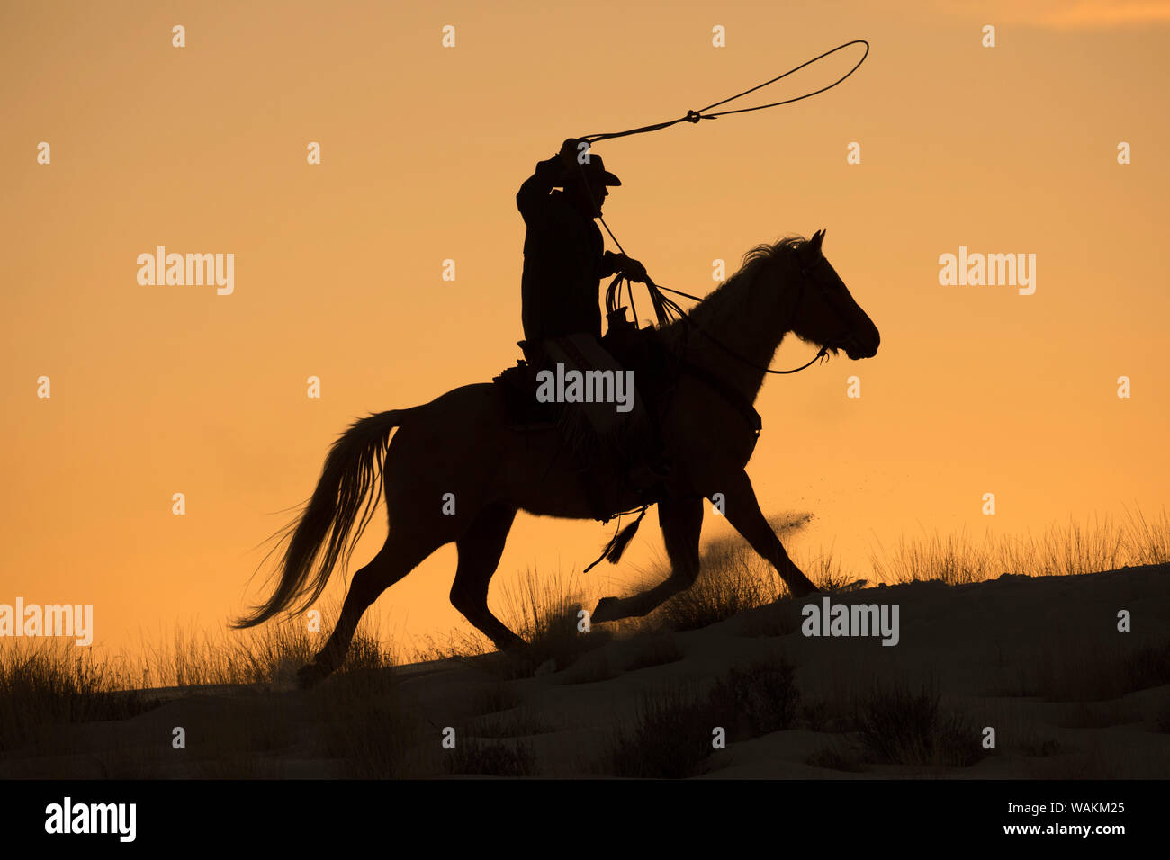 cowboy horse drive on hideout ranch shell wyoming cowboy riding his horse with rope out silhouetted at sunset mr WAKM25