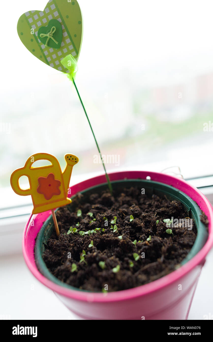 Green Tree Sprout Plants In The Pink Pot At The Window