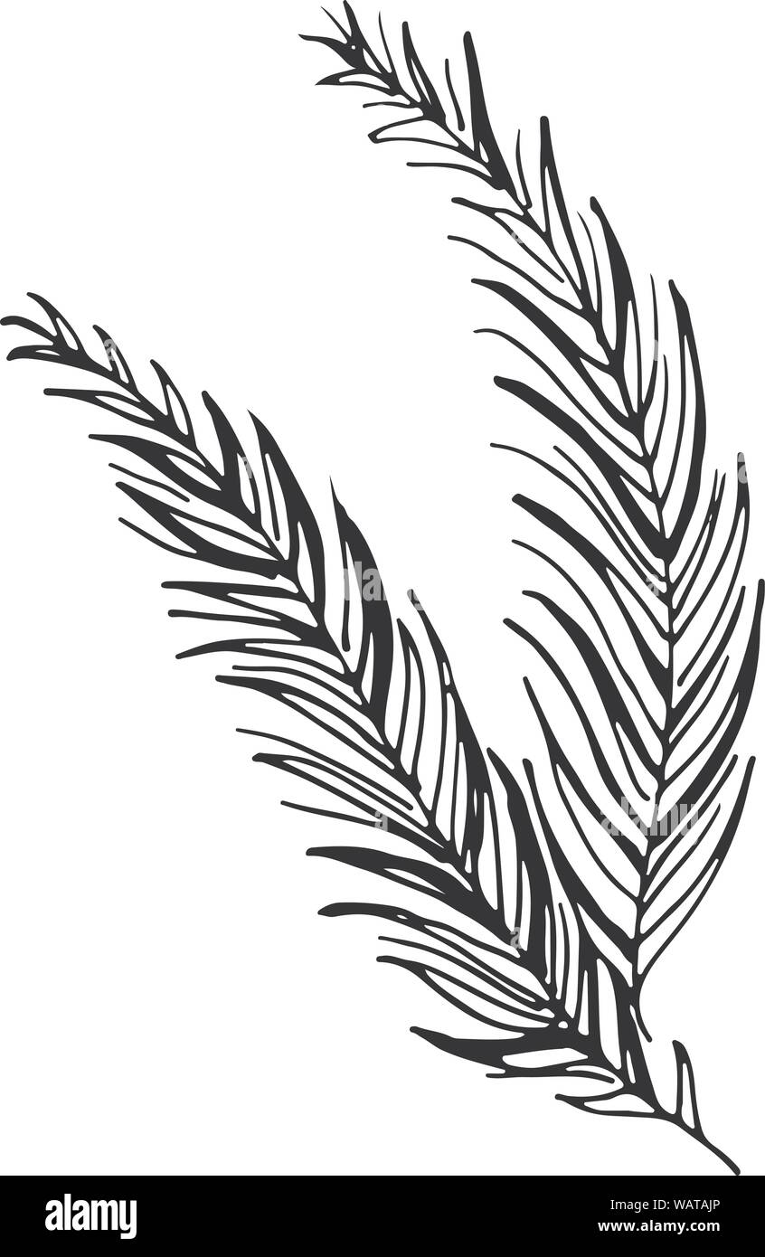 Black Tropical Leaves On White Background Silhouette Palm Leaves Vector Graphic Illustration Hand Drawn Style Illustration Tropical Plant Silhouet Stock Vector Image Art Alamy Download this free vector about black and golden tropical leaves background, and discover more than 10 million professional graphic resources on freepik. https www alamy com black tropical leaves on white background silhouette palm leaves vector graphic illustration hand drawn style illustration tropical plant silhouet image264837294 html