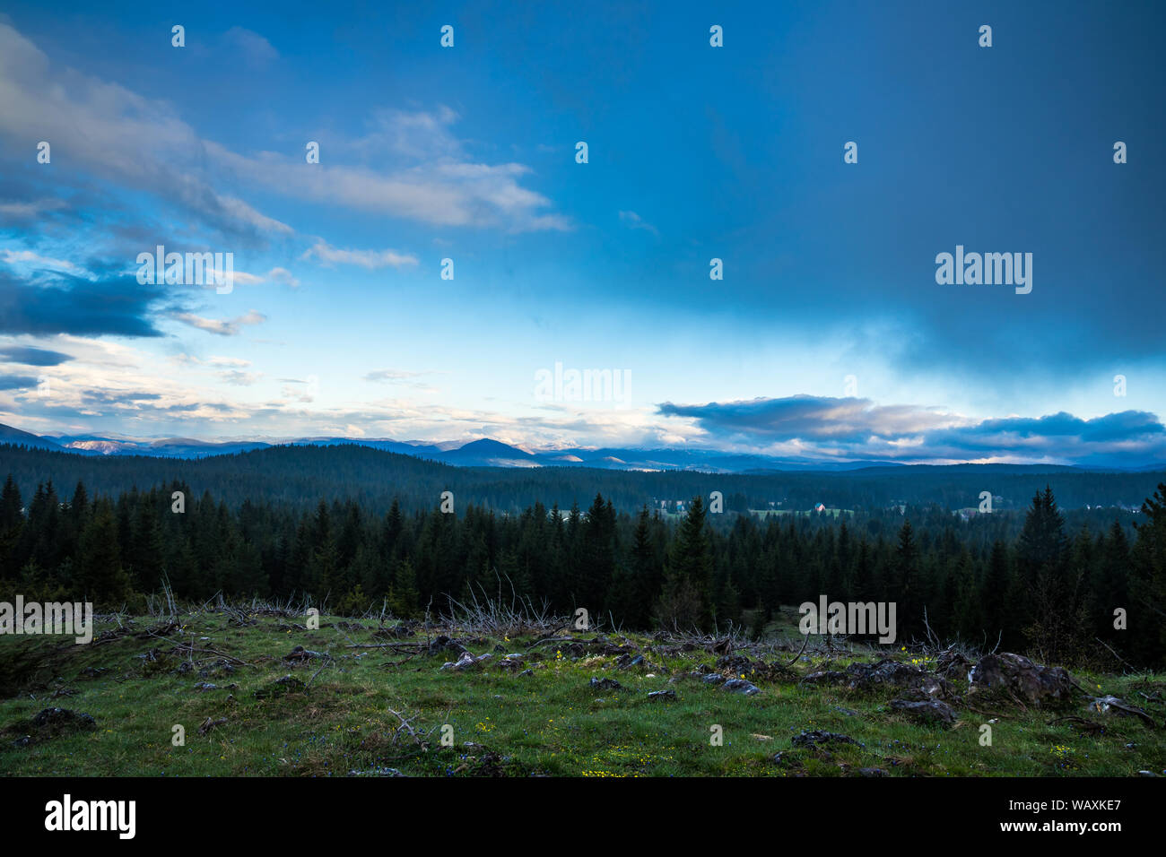 Montenegro Endless Green Conifer Trees Covering Highlands Of