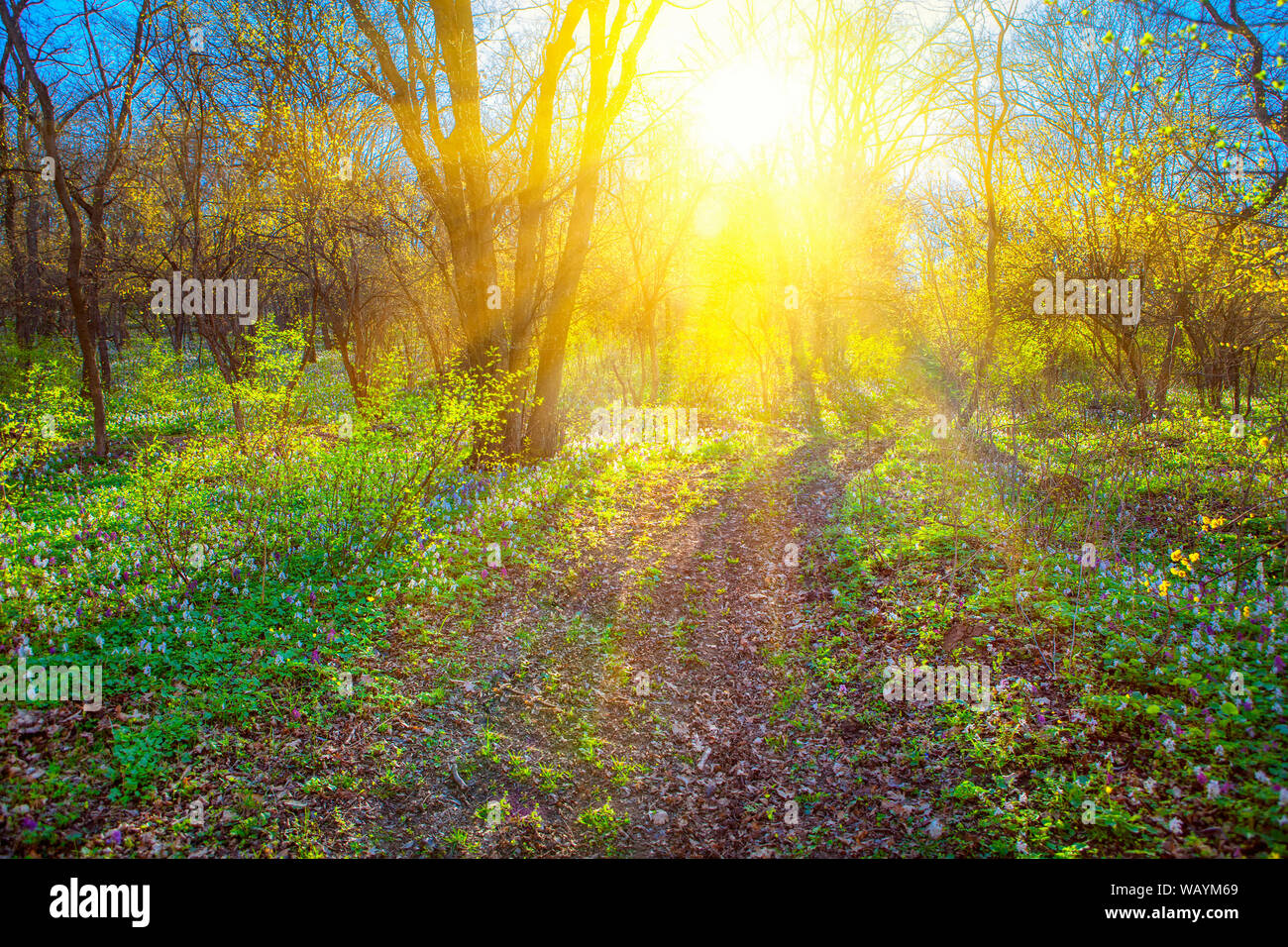 spring landscape with sun shining through the branches Stock Photo