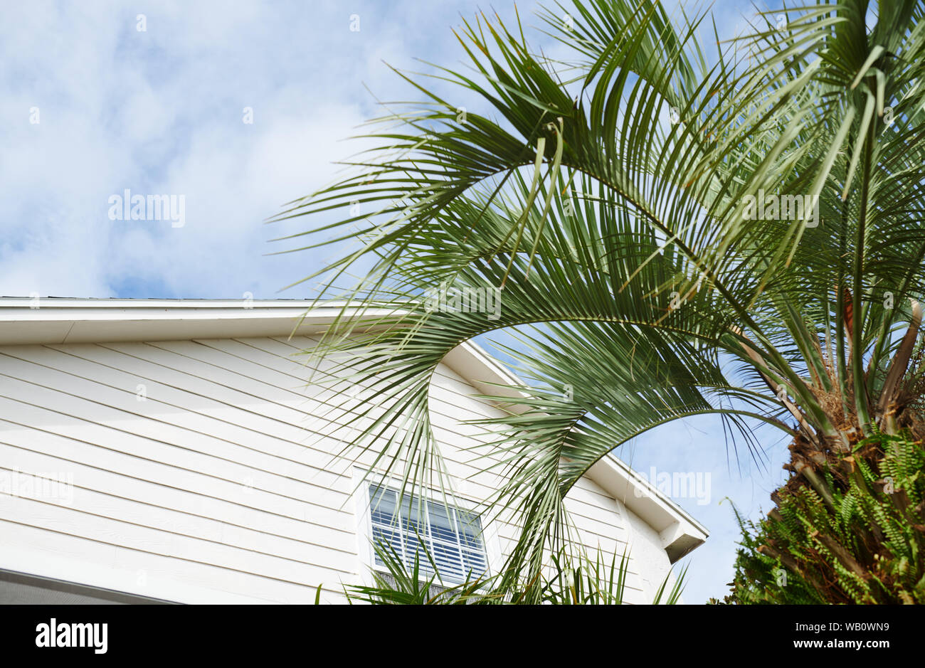 Residential building and palm tree at the backyard Stock Photo