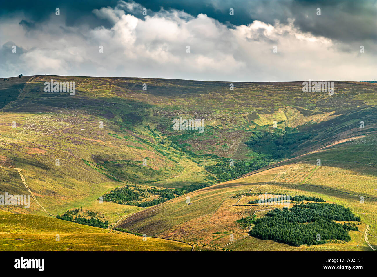 Bowhill, Selkirk, Scottish Borders, UK. 1st August 2019. Looking north across the Yarrow Valley to Minch Moor from Newark Hill. Stock Photo
