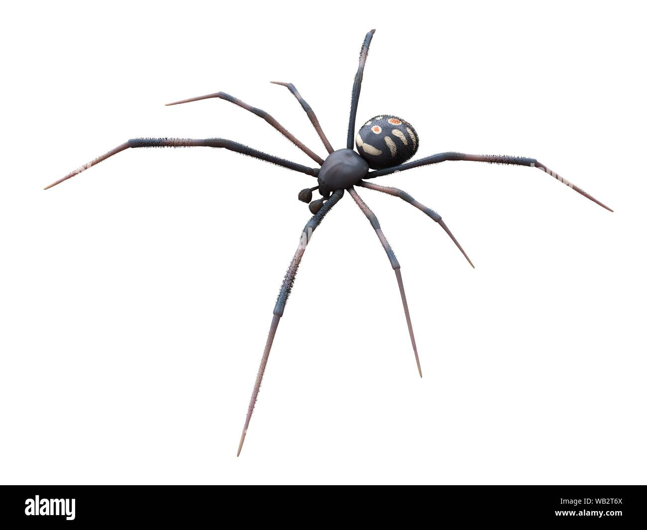 Black Widow Spider Cut Out Stock Images Pictures Alamy