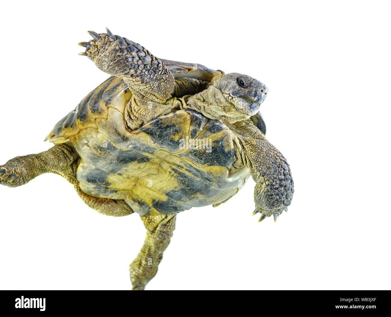 turtle isolated Stock Photo