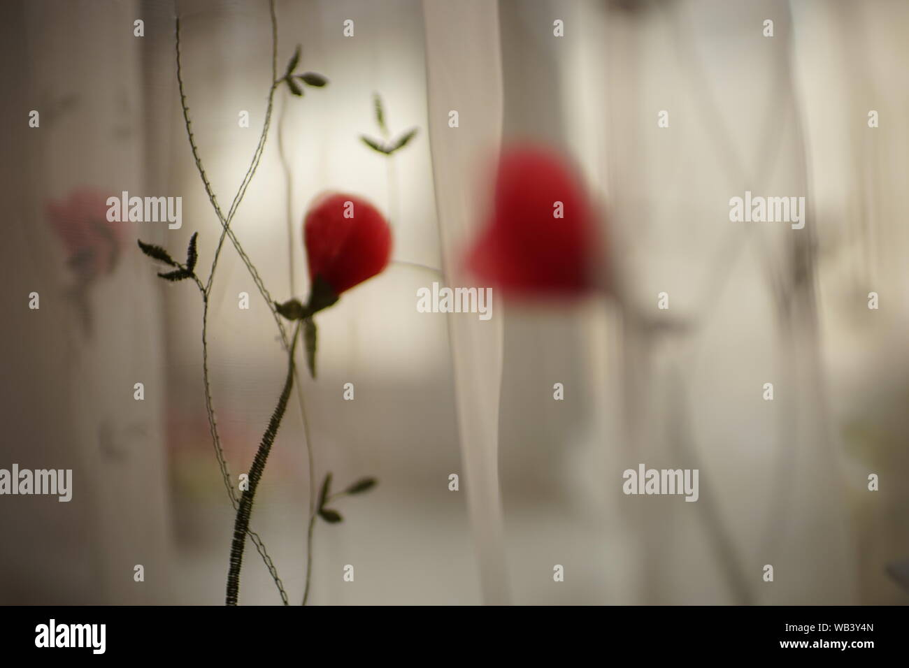 transparent tulle with embroidery and volume roses Stock Photo