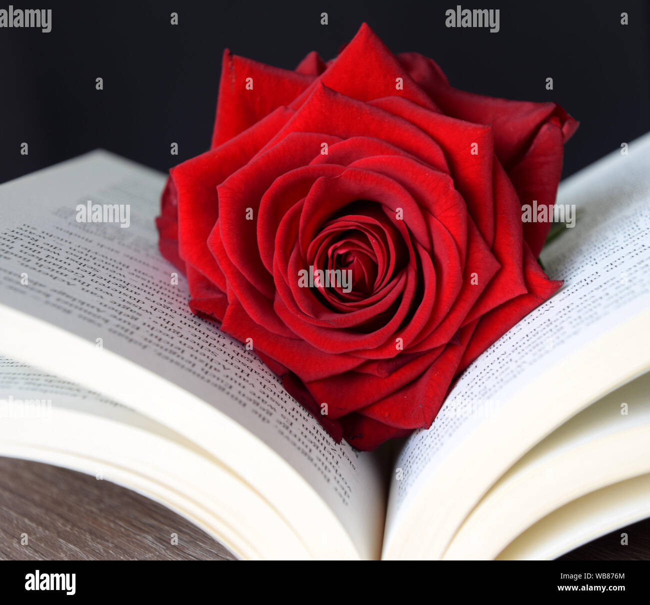 Red Rose Love Photography