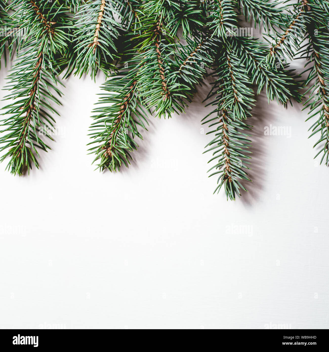 fir branches on white background christmas wallpaper WB9HHD