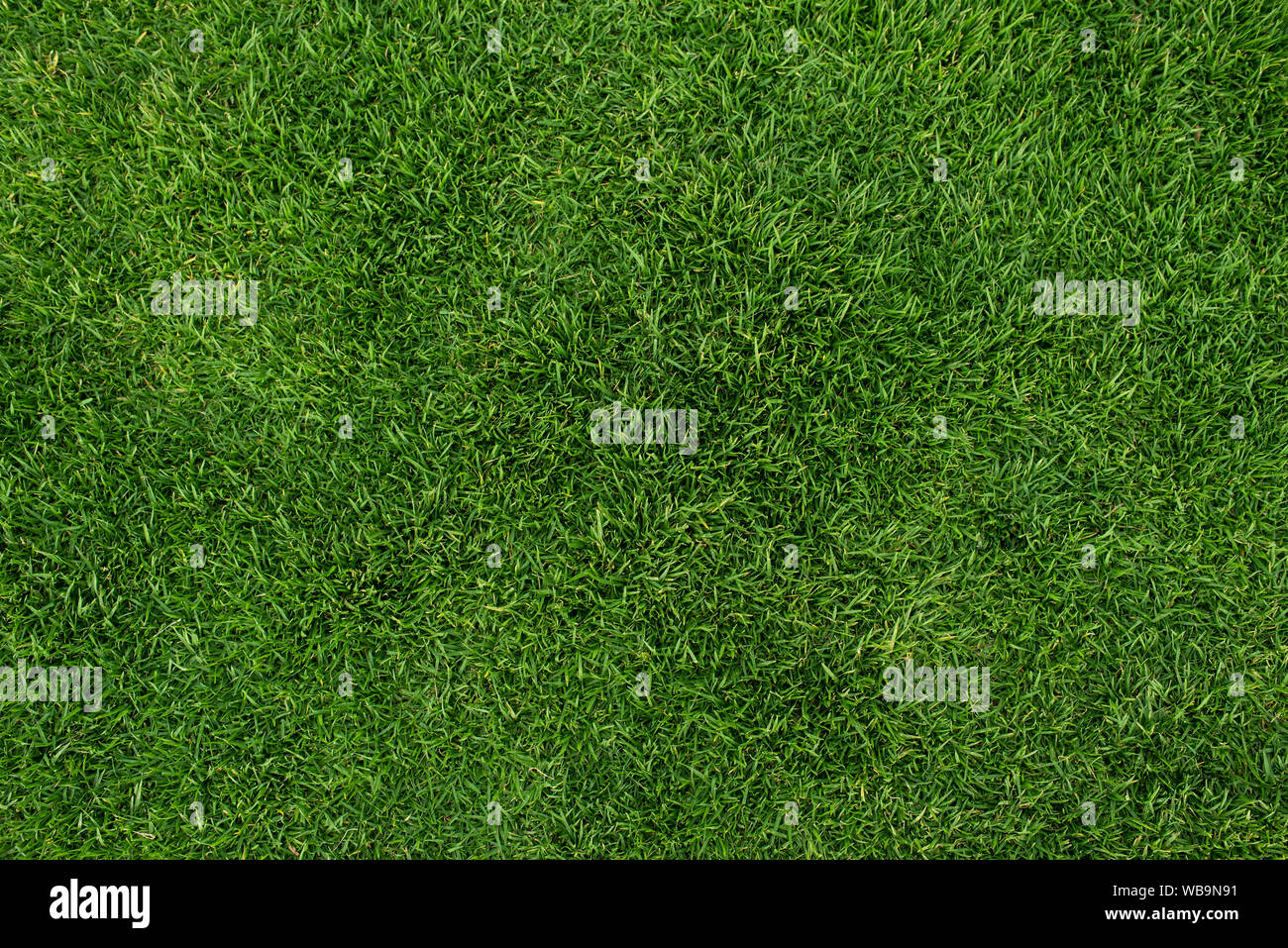 Seamless Healthy Green Grass Texture Rf Outdoor Background Natural Wallpaper Lawn Backdrop Stock Photo Alamy