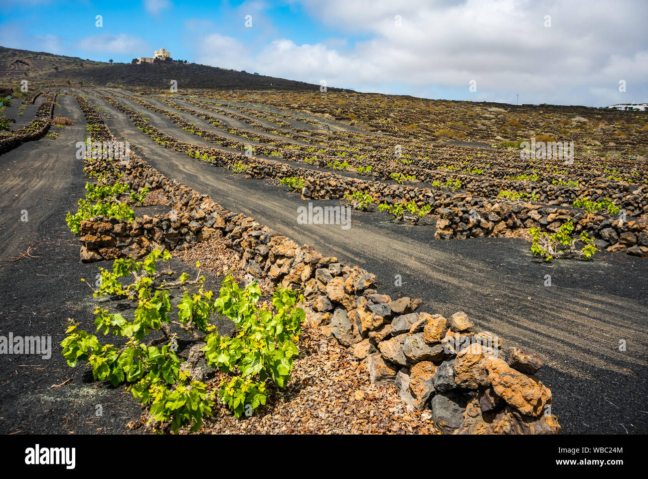 Stunning landscape with volcanic vineyards. Traditional wine production of Lanzarote. Canary Islands. Spain Stock Photo