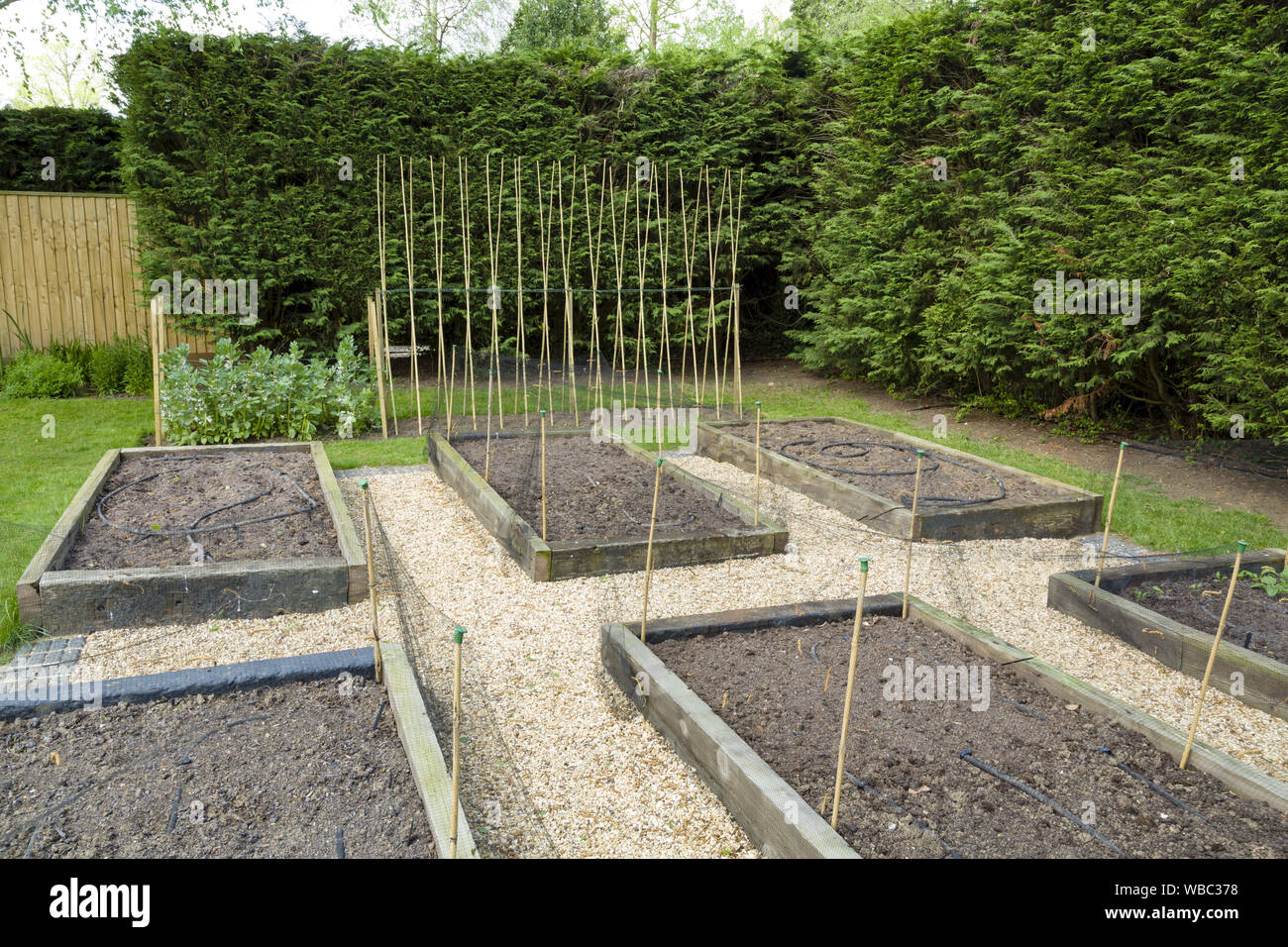 Planning And Making A New Vegetable Garden With Raised Beds Stock