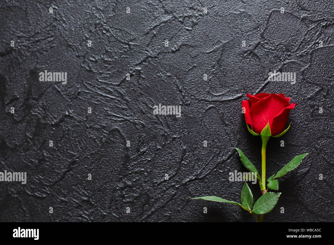 Red rose on a black background, stone. A condolence card. Empty