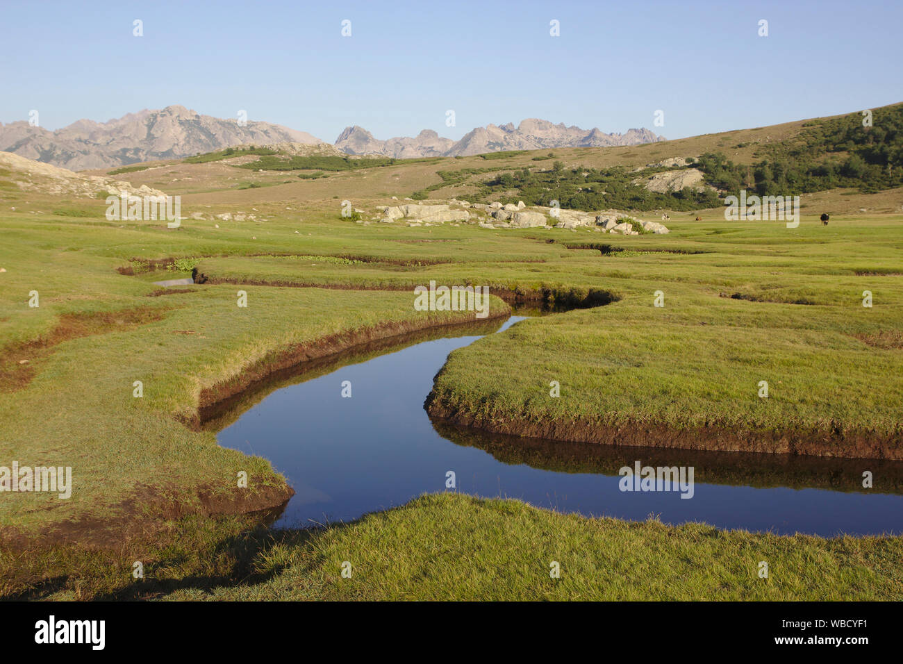 Streams and ponds, bog at Lac de Nino, France, Corsica, GR20 Stock Photo