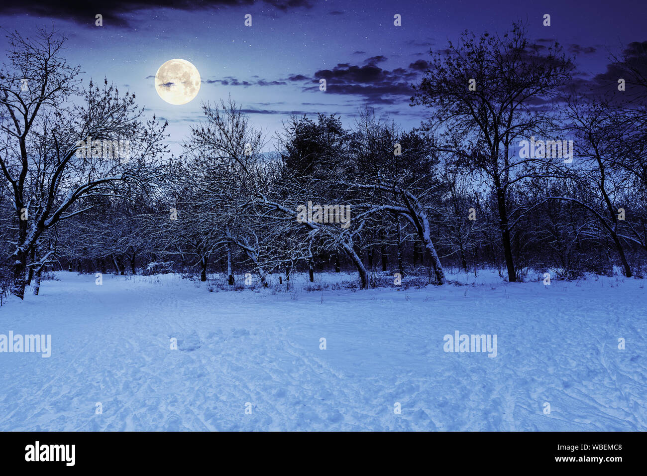 Park In Winter At Night Beautiful Nature Scenery In Full Moon Light Stock Photo Alamy