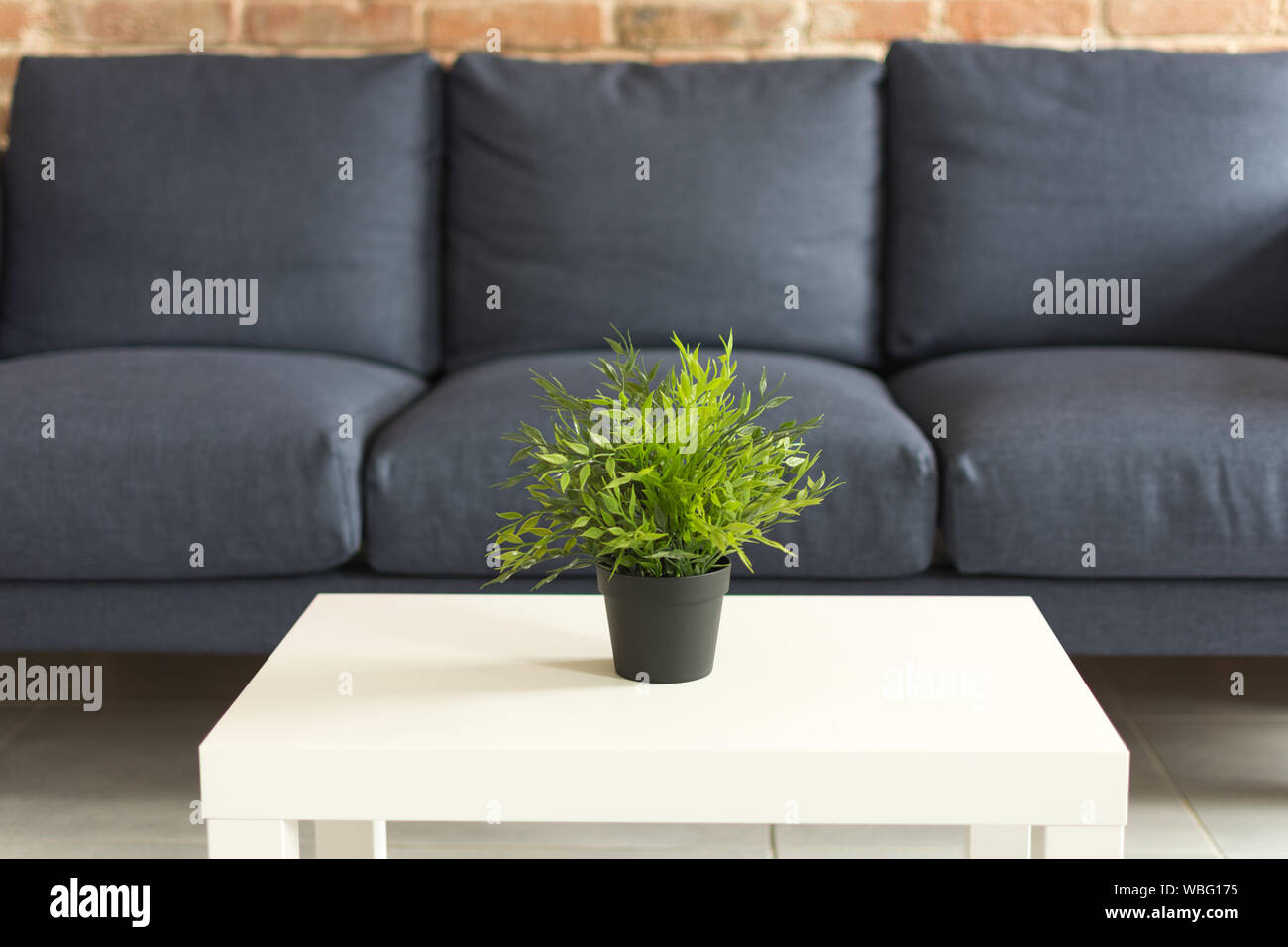 Picture of: Modern Living Room Interior Flowerpot On The White Coffee Table Green Plant In A Black Flowerpot On The Table Modern Blue Sofa With Cushions Stock Photo Alamy