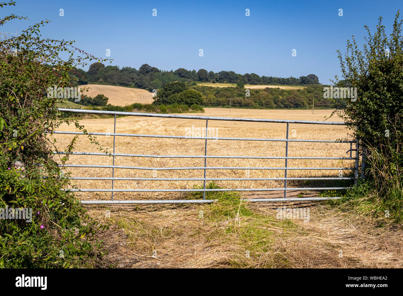 Padlocked Metal and Wooden Farm Gates Protecting Livestock
