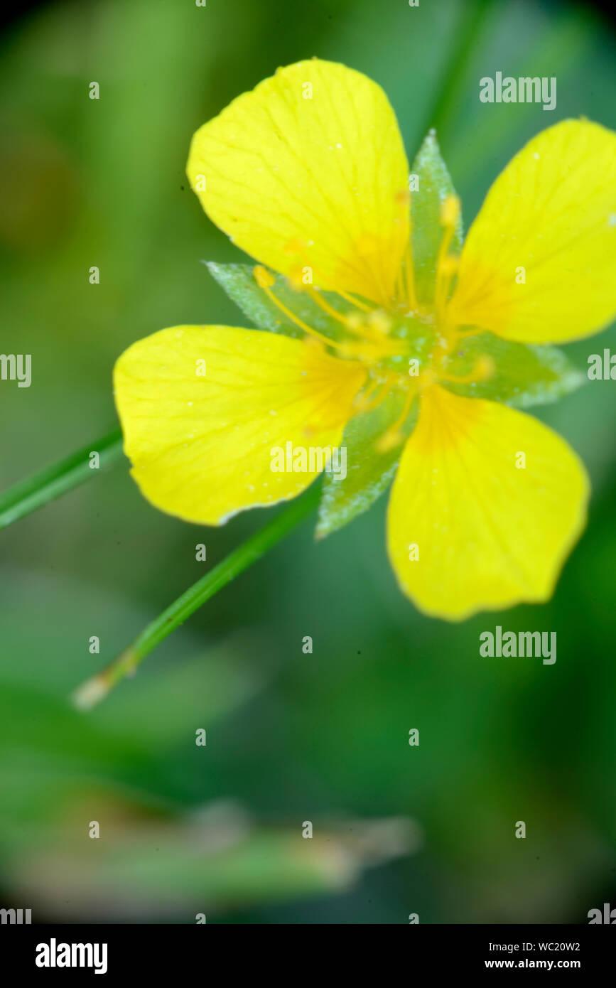 living, algae, fungi, sunlight, life,  endosymbiosis, cyanobacteria, chlorophylls, mycotrophic chlorophyll, photosynthesize, reproductionn, common, Pl Stock Photo