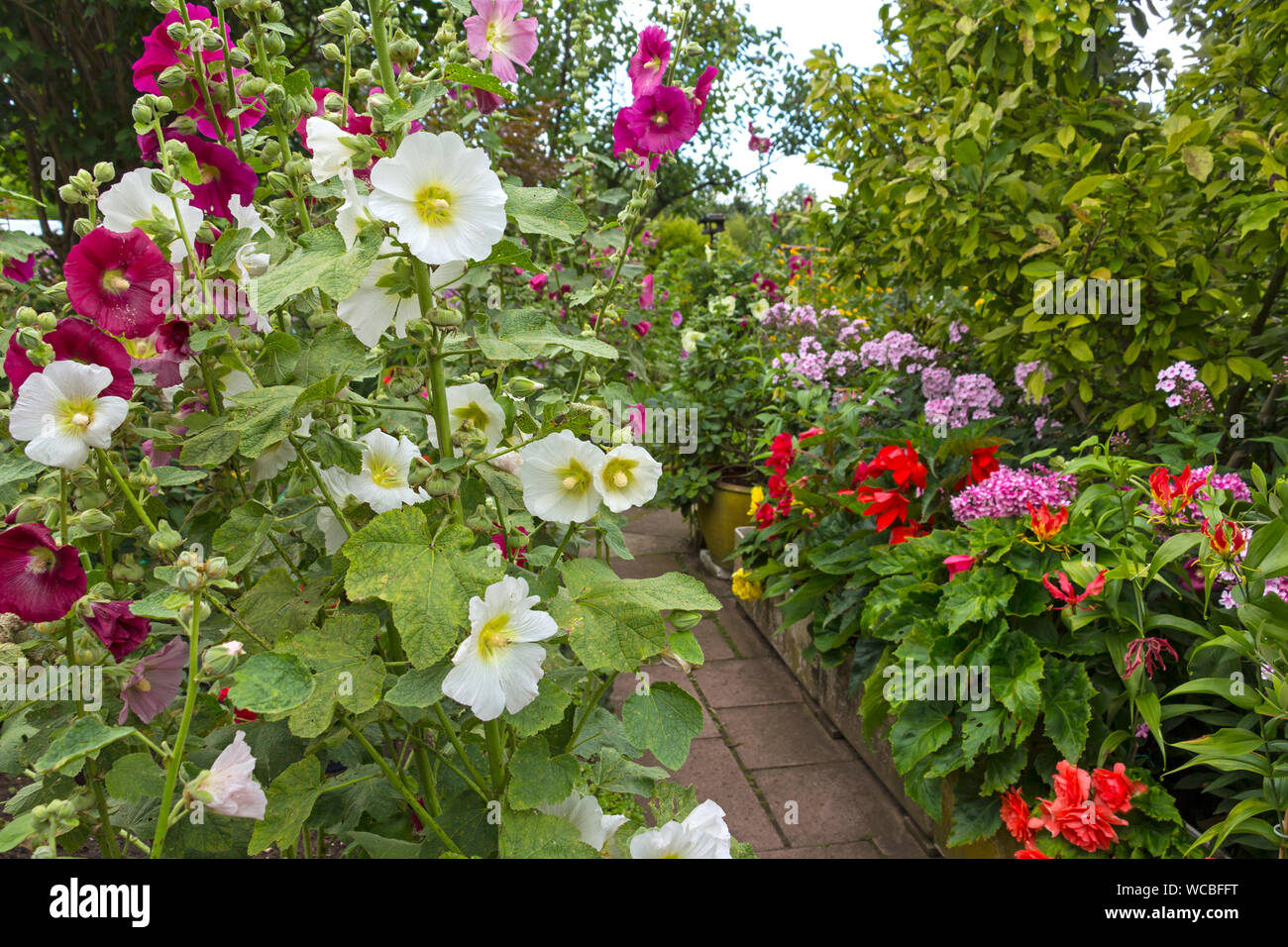 Flowers Blooming Outdoors Stock Photo