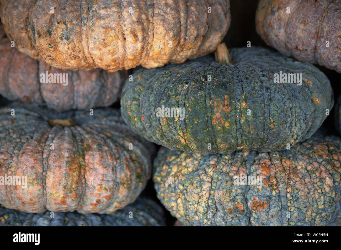 Stack Of Pumpkins For Sale Stock Photo