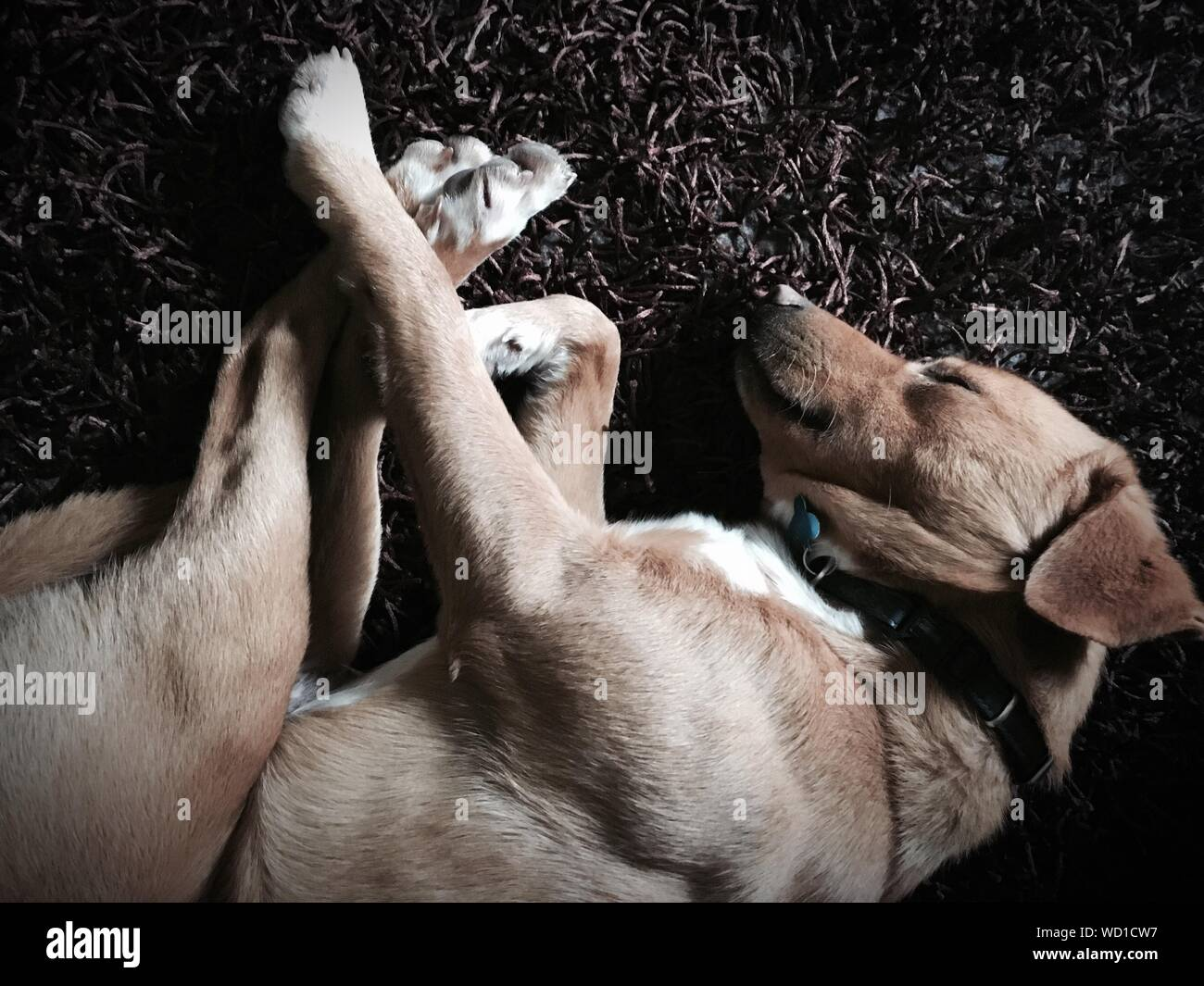 High Angle View Of Dogs Sleeping On Field Stock Photo