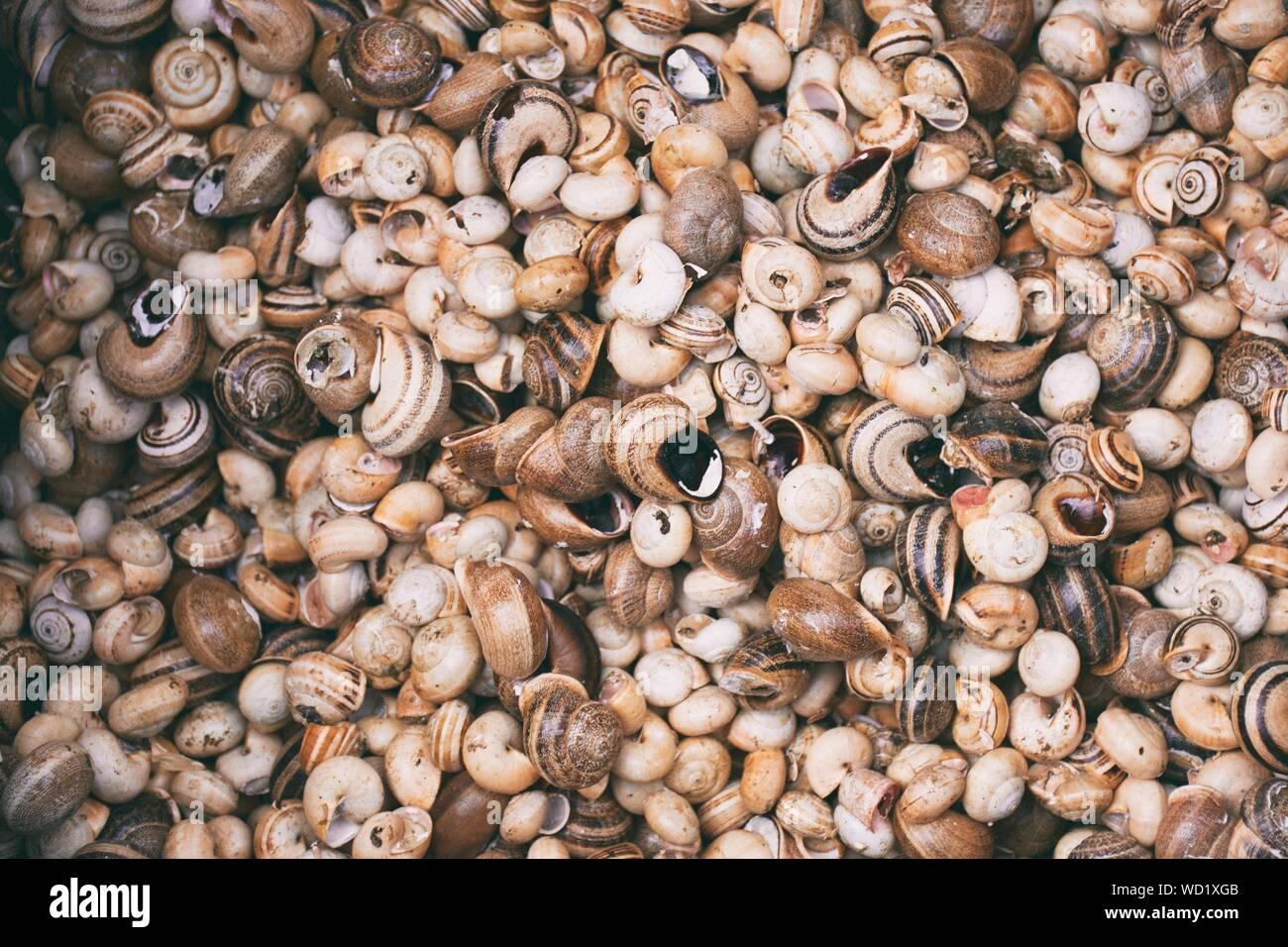Full Frame Shot Of Seashells Stock Photo