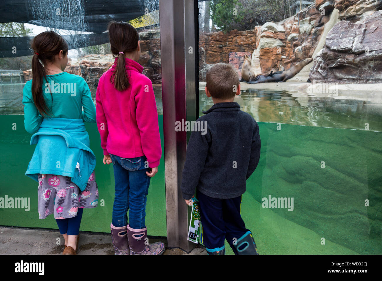 Three children watch as the sea lions rest on the far side of their enclosure at the Fort Wayne Children's Zoo in Fort Wayne, Indiana, USA. Stock Photo
