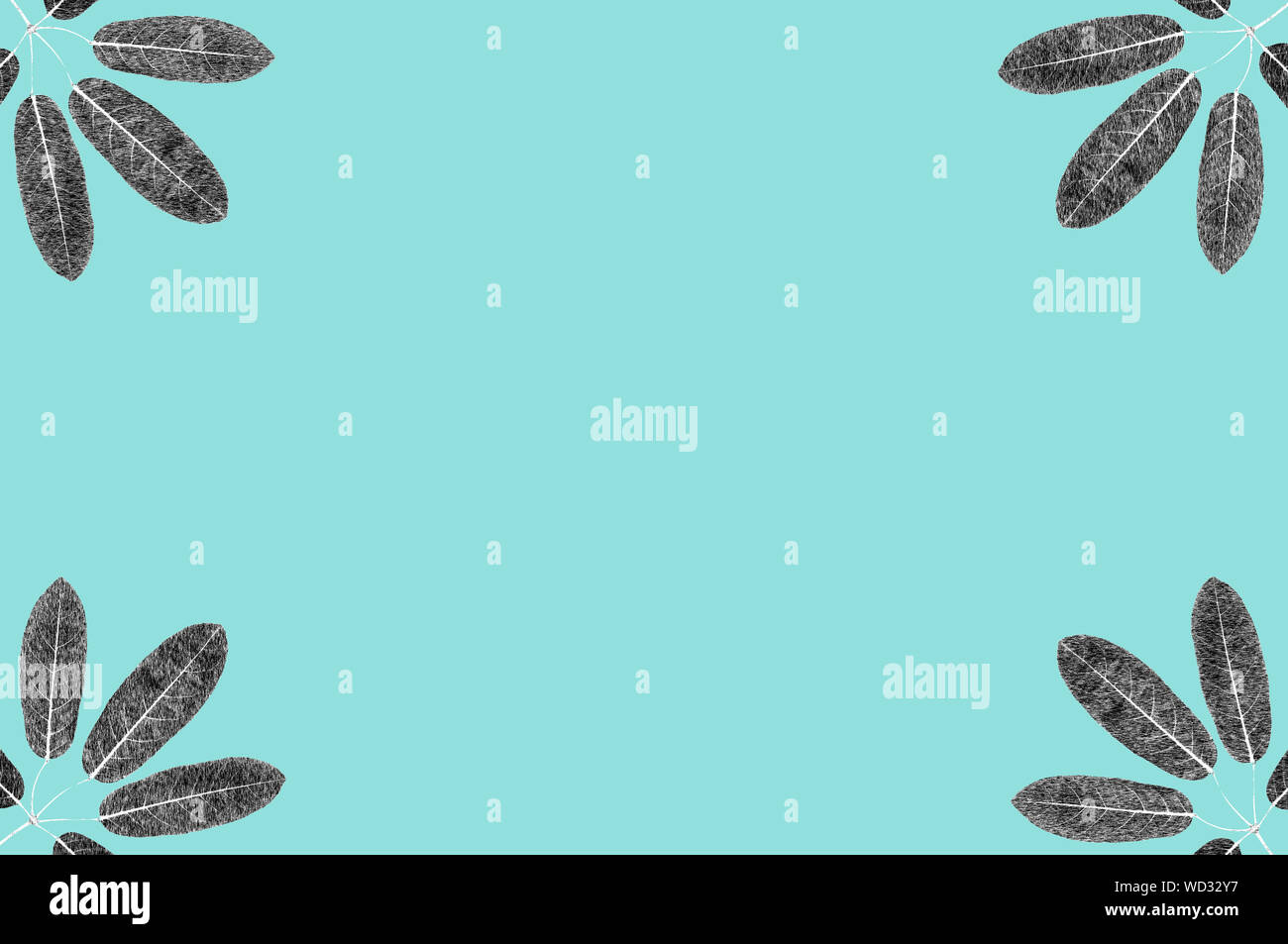 Five lobes leaves black and white skecth illustrate graphic on pastel blue background for design work Stock Photo