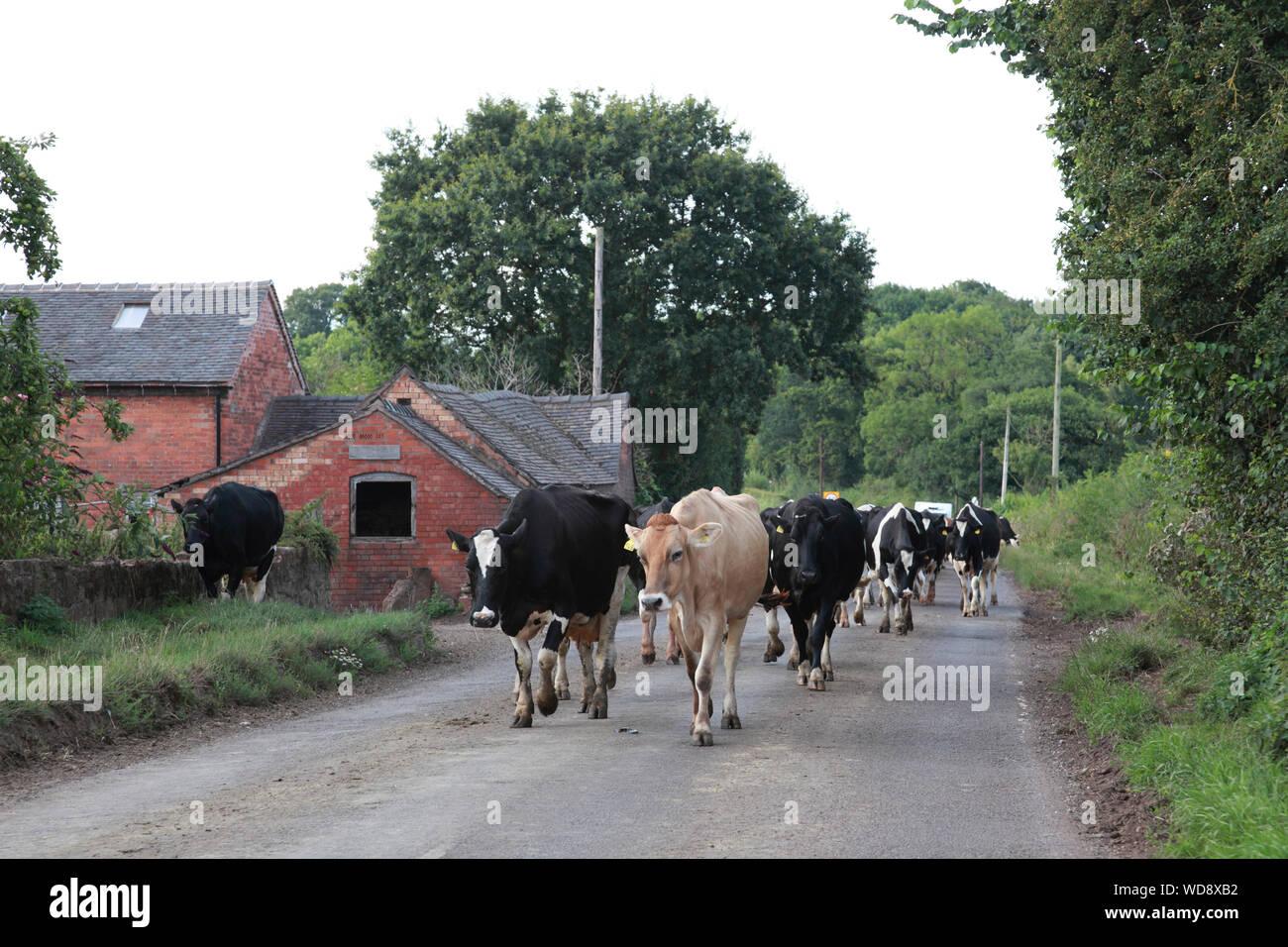 A529 road