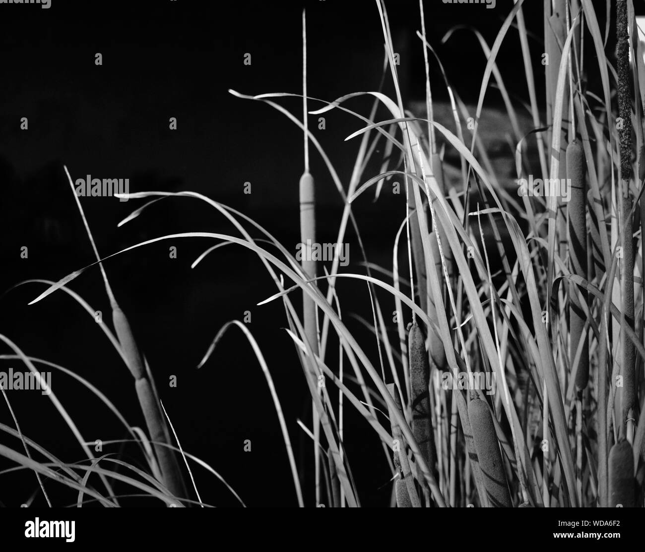 Plants At Night Stock Photo 266370694 Alamy