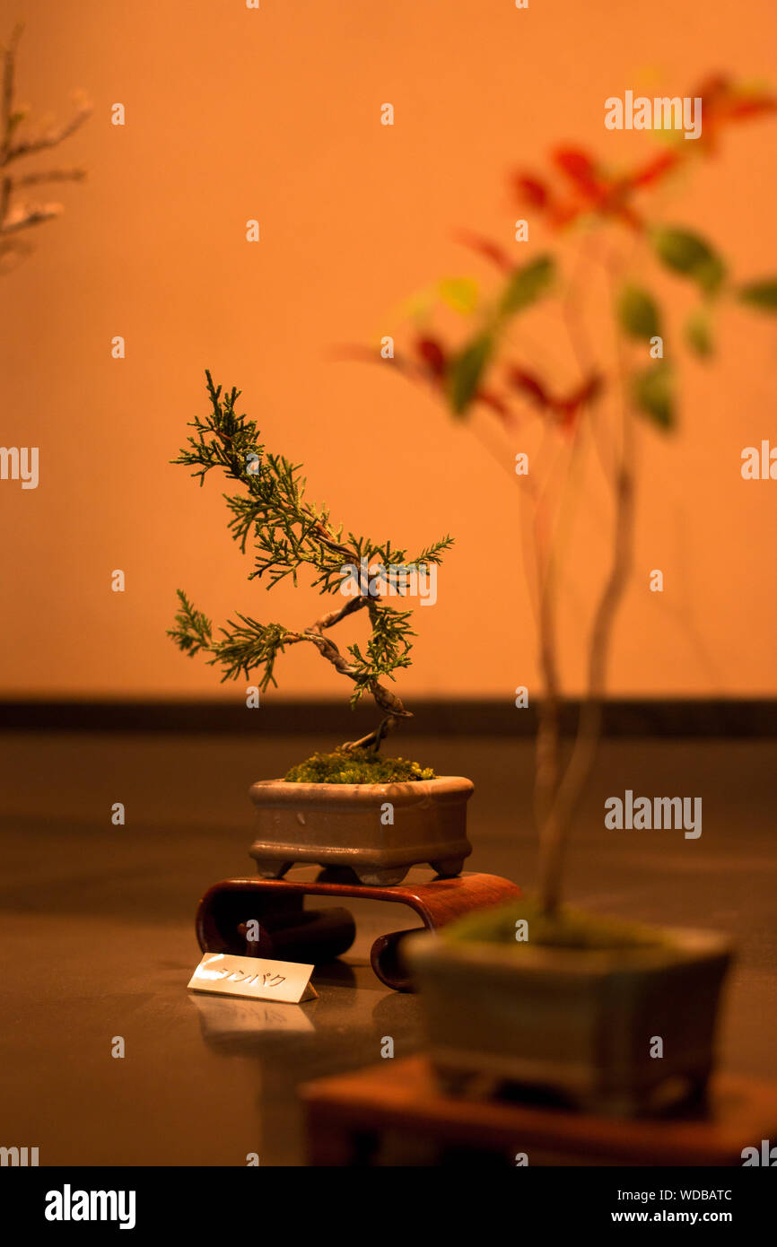 Close Up Of Bonsai Tree For Sale Stock Photo Alamy
