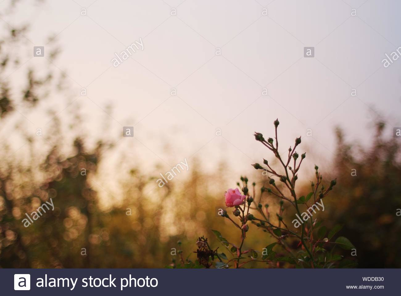Close-up Of Plant Against Blurred Background Stock Photo