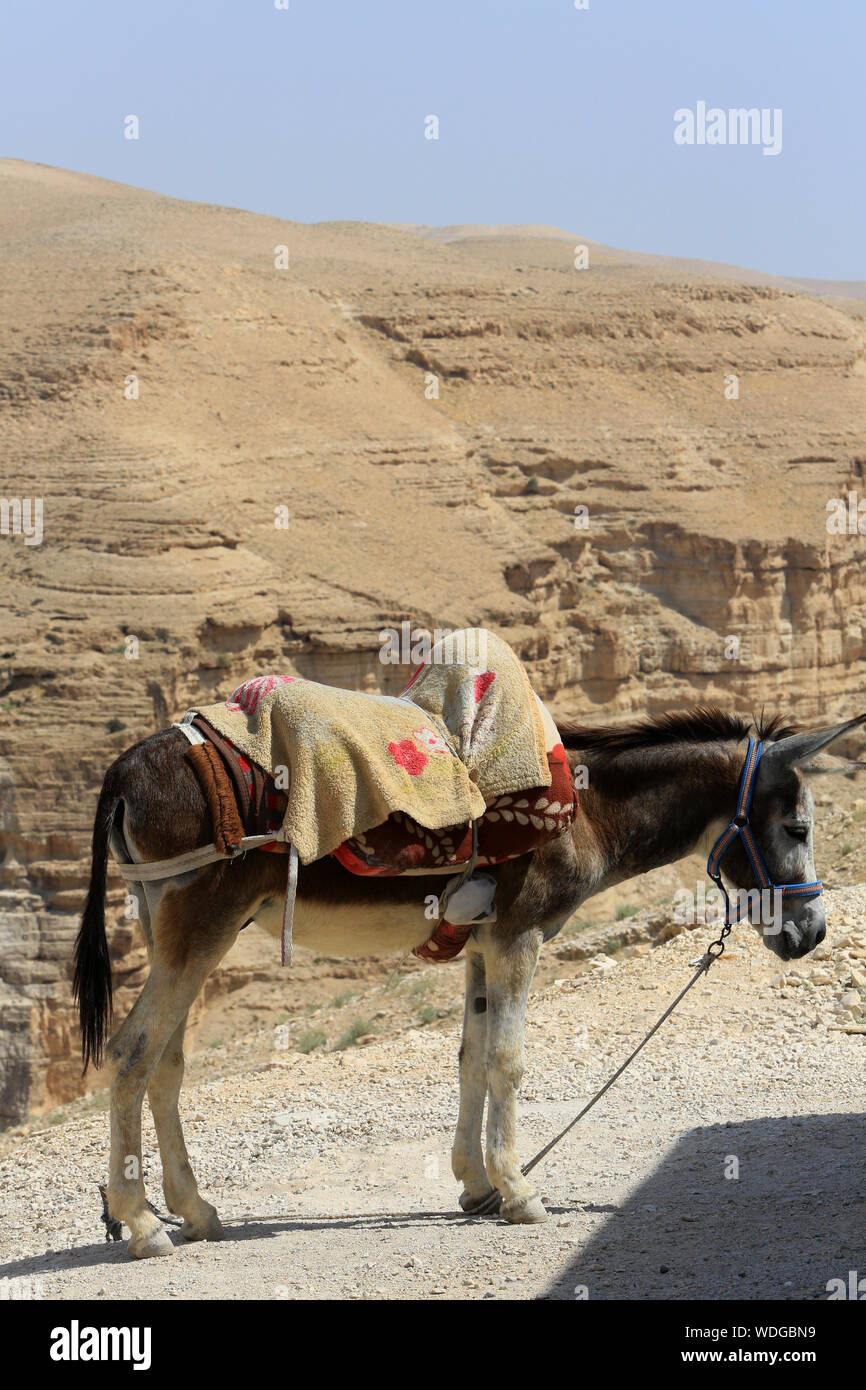 Ane. Judean Desert. Palestine. Stock Photo