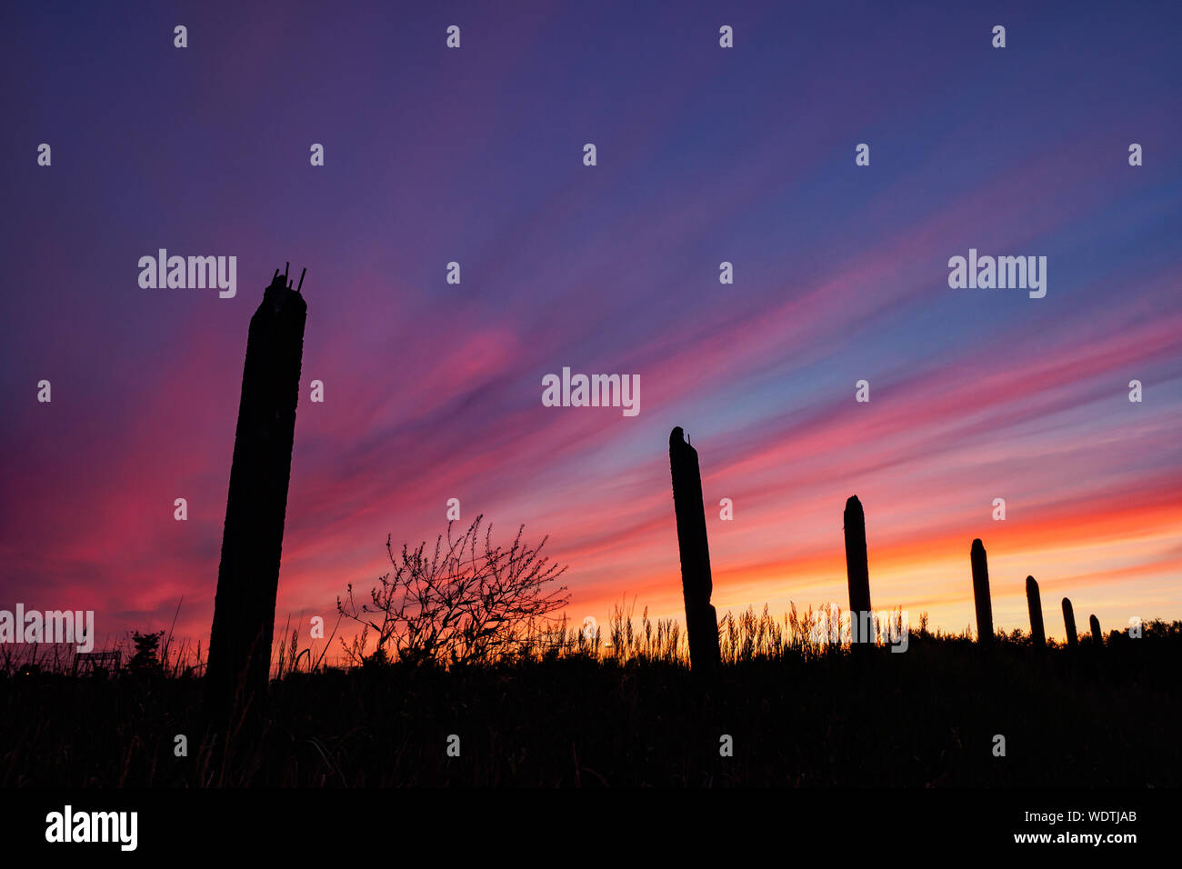 Silhouette Plants On Field Against Dramatic Sky During Sunset Stock Photo