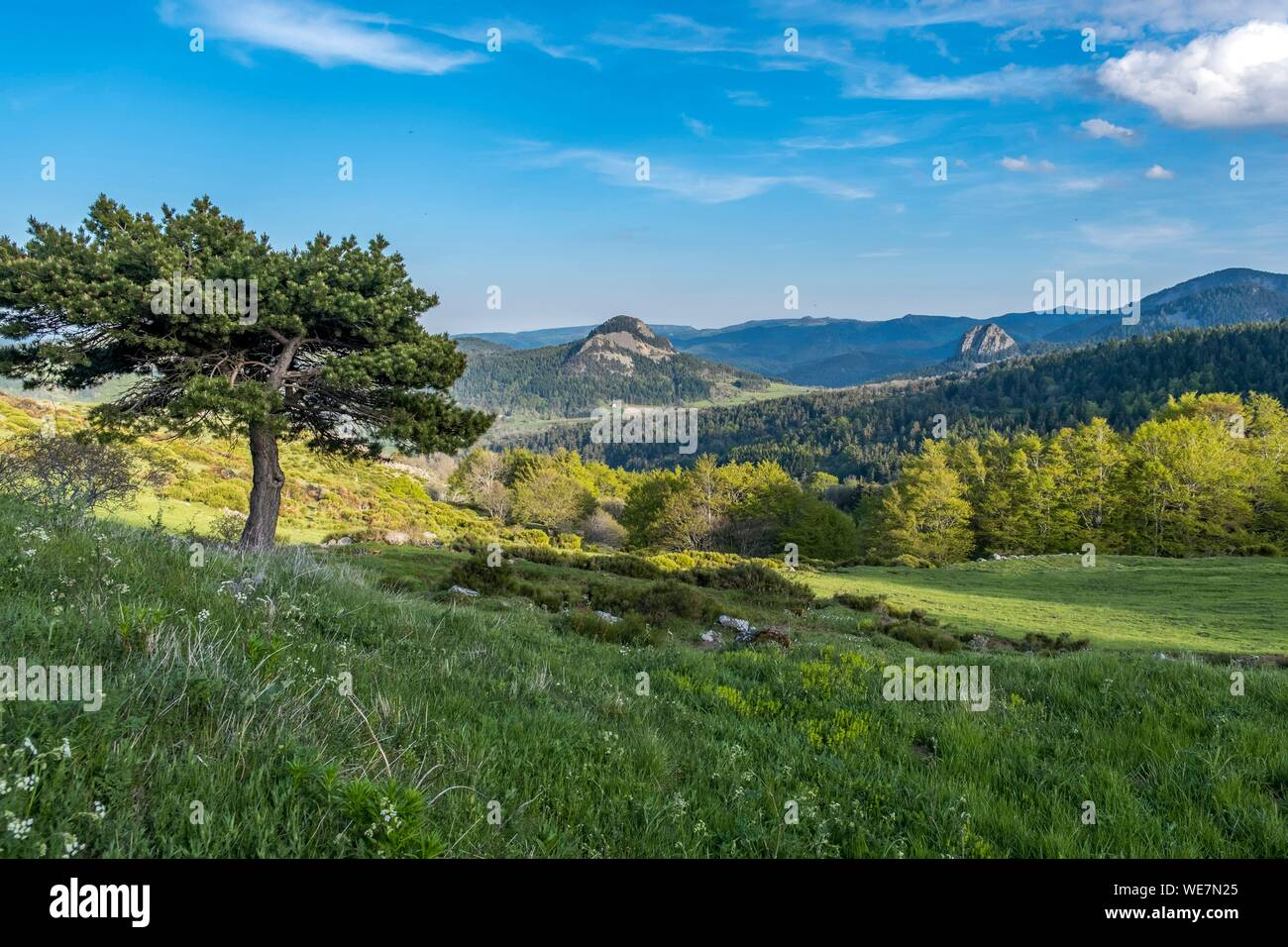 France, Ardeche, Parc Naturel Regional des Monts d'Ardeche (Regional natural reserve of the Mounts of Ardeche), Suc de Boree, Medille path, Vivarais, Sucs area Stock Photo