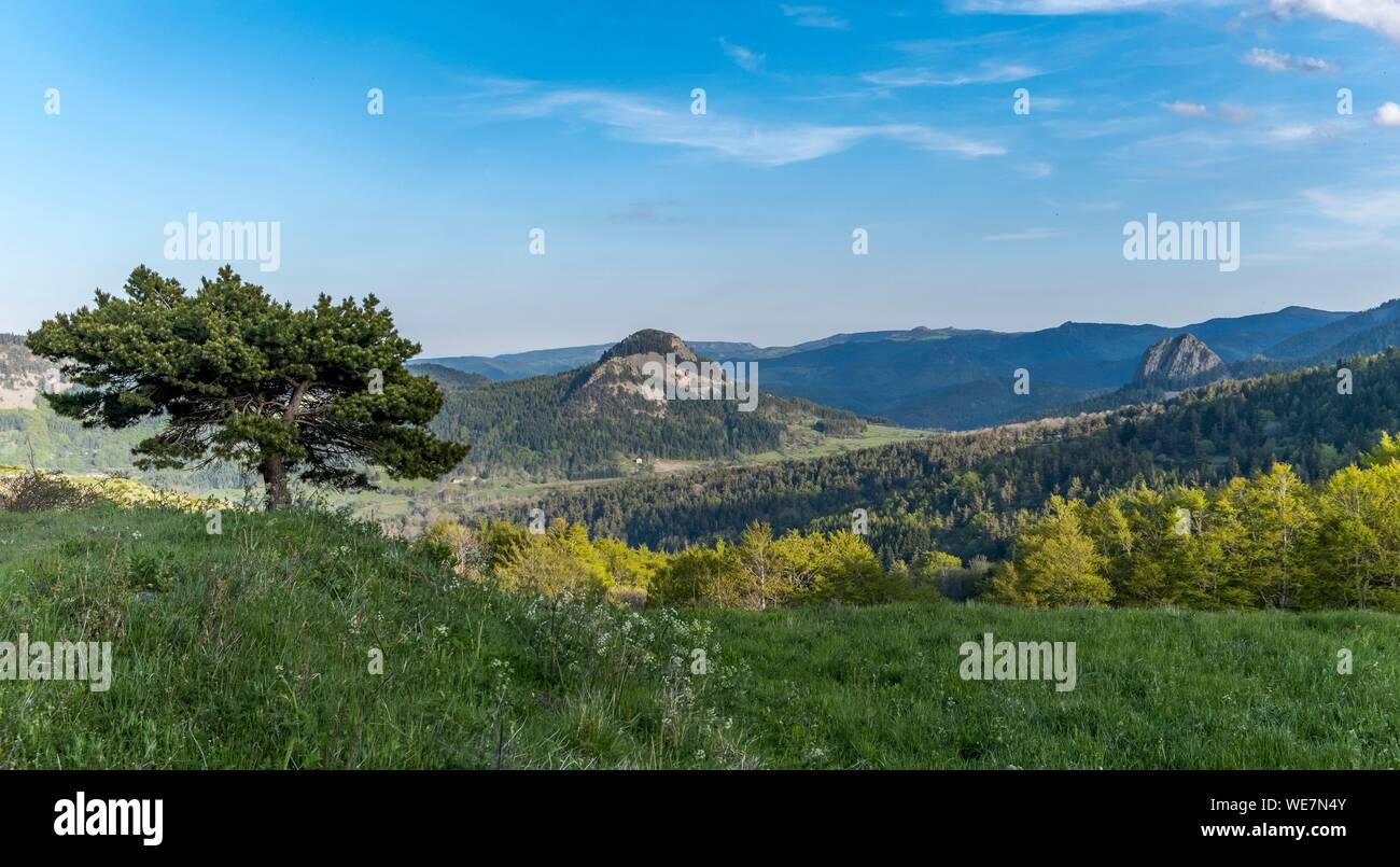 France, Ardeche, Parc Naturel Regional des Monts d'Ardeche (Regional natural reserve of the Mounts of Ardeche), Suc de Boree, Medille path, Vivarais, Sucs area Stock Photo