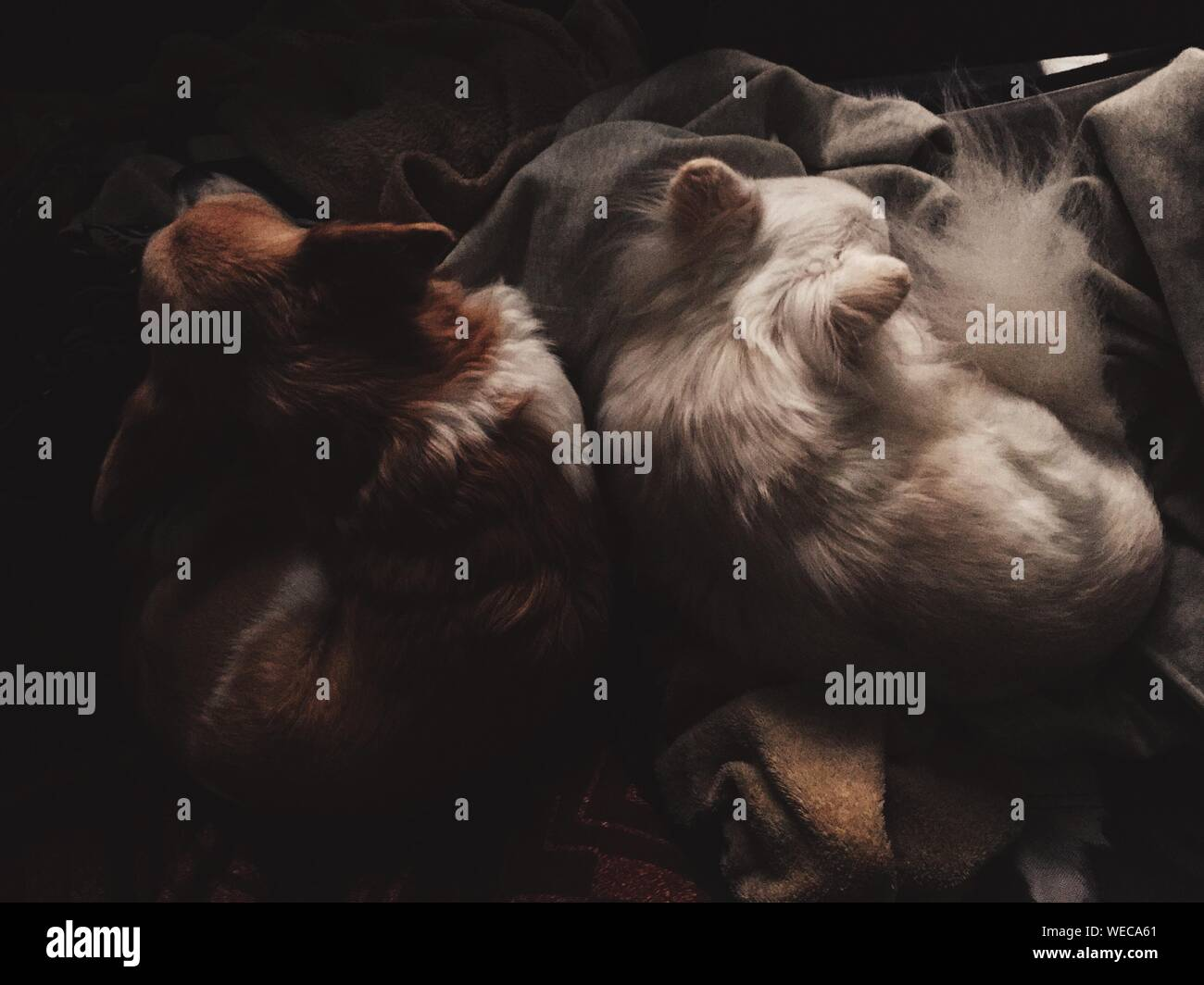 High Angle View Of Dogs Sleeping At Home Stock Photo