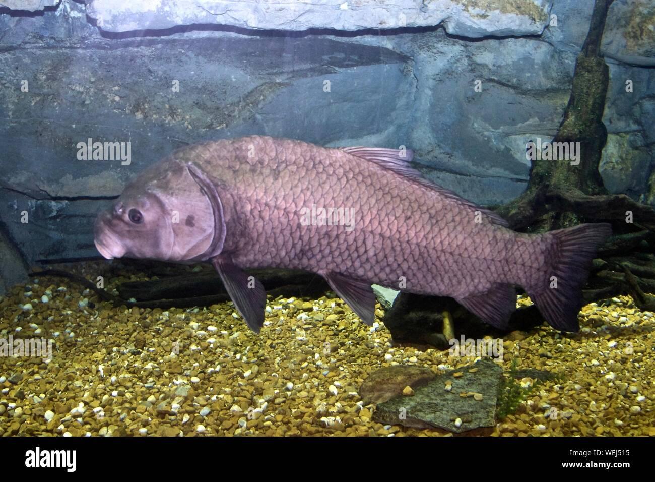 Close-up Of Fish In Aquarium Stock Photo