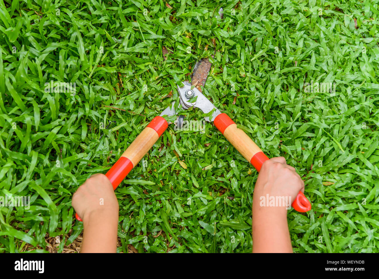 hands hold the gardening scissors on green,cutting the grass by gardener. - Stock Photo