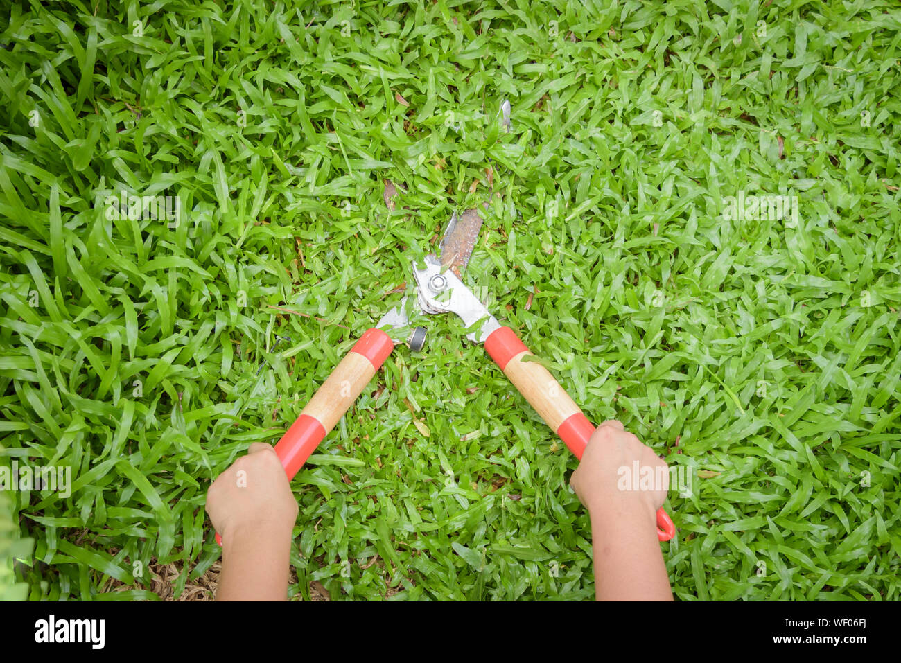 Cropped Hands Of Woman Cutting Grass Stock Photo