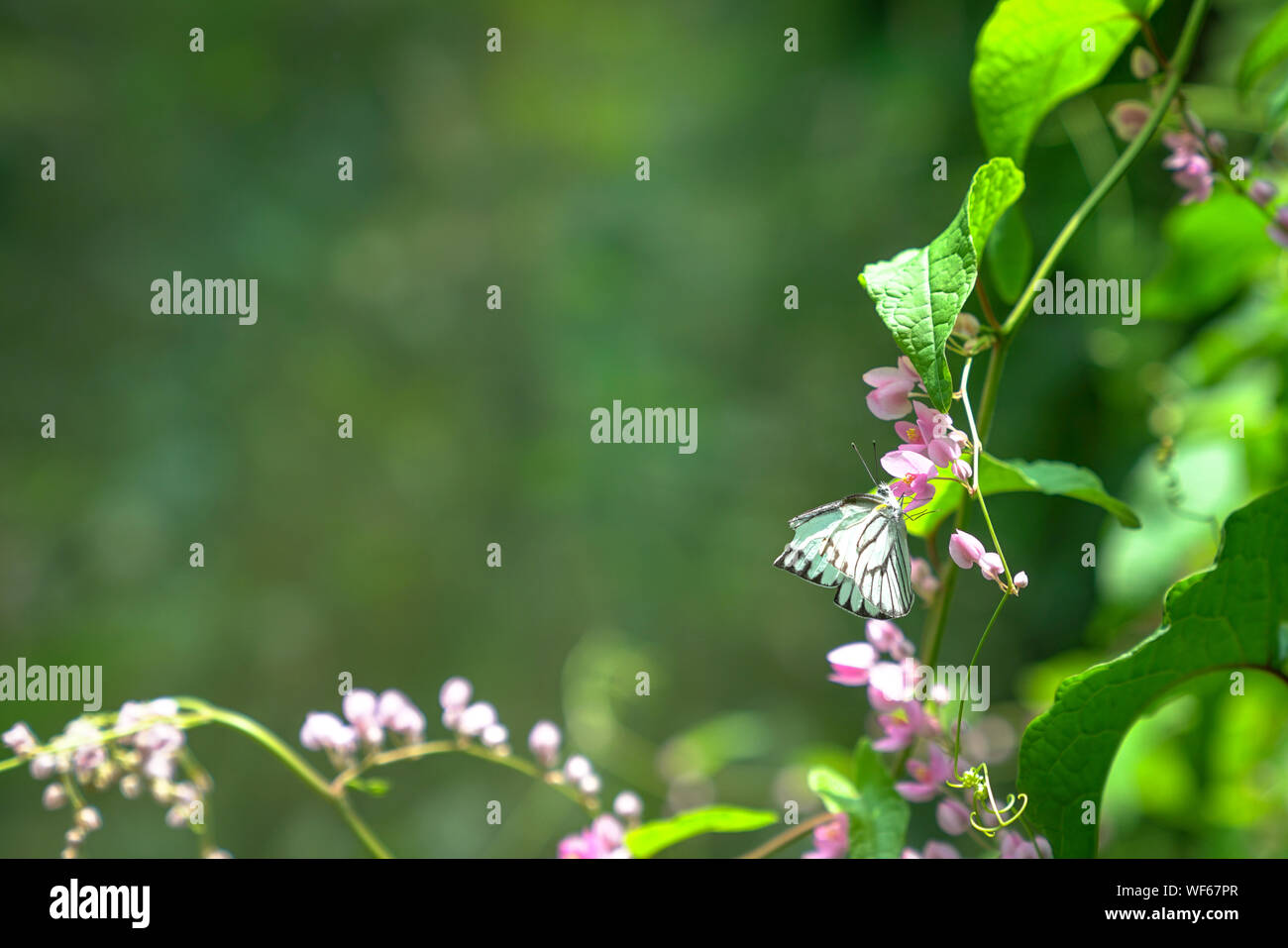 Butterfly garden, with butterflies, pink flowers and lush