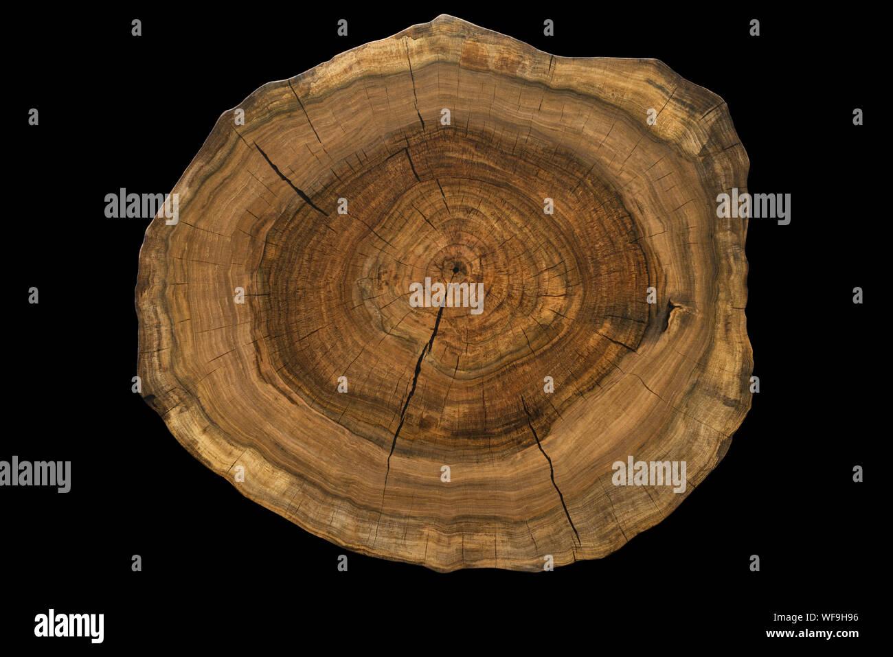 Cross Section Black Walnut Tree Stock Photos & Cross Section