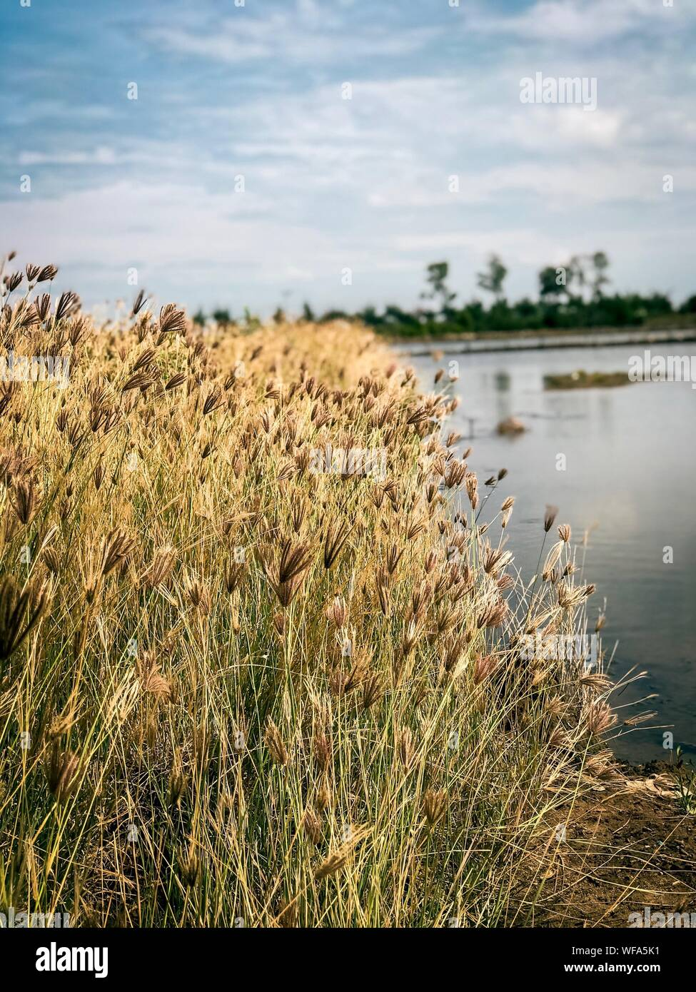 Plants Growing In Water Against Sky Stock Photo