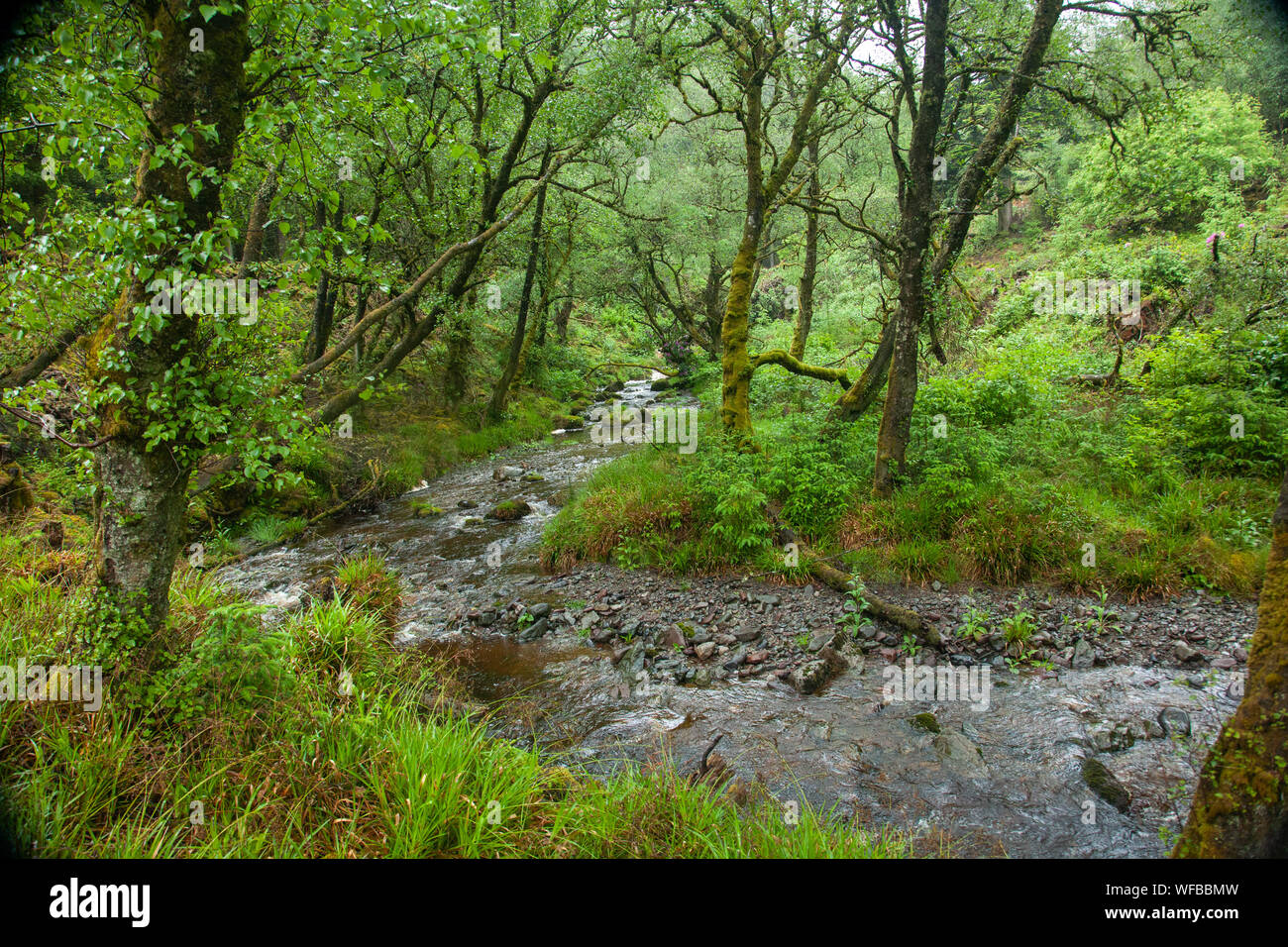 River running through a forest, Isle of Arran, Scotland, United Kingdom Stock Photo