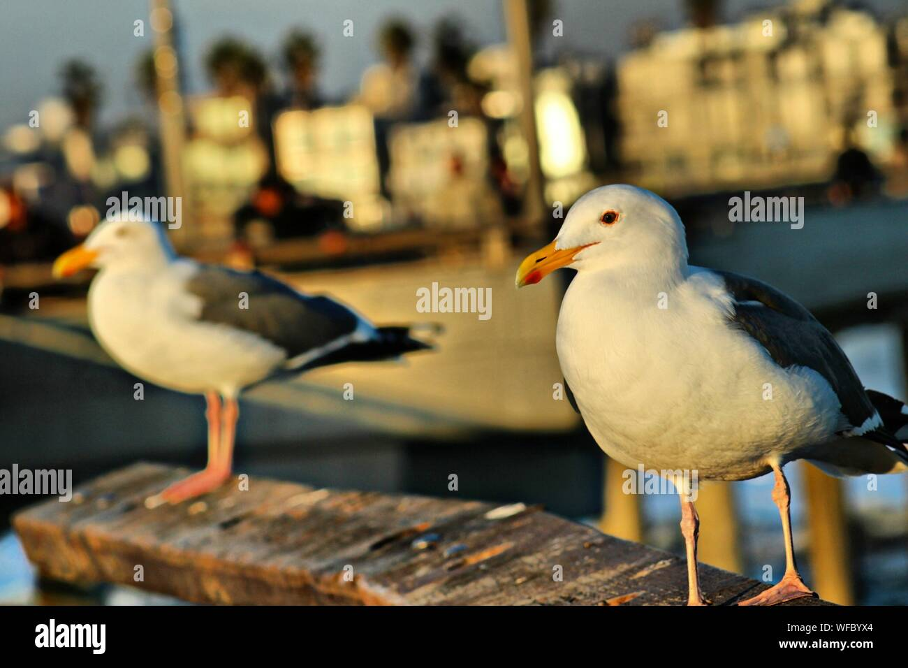 Close-up Of Seagull Perching Outdoors Stock Photo