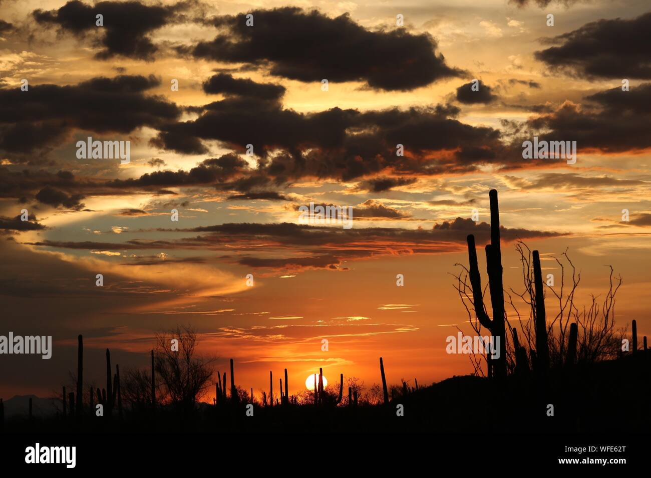 Silhouette Trees Against Sky During Sunset Stock Photo