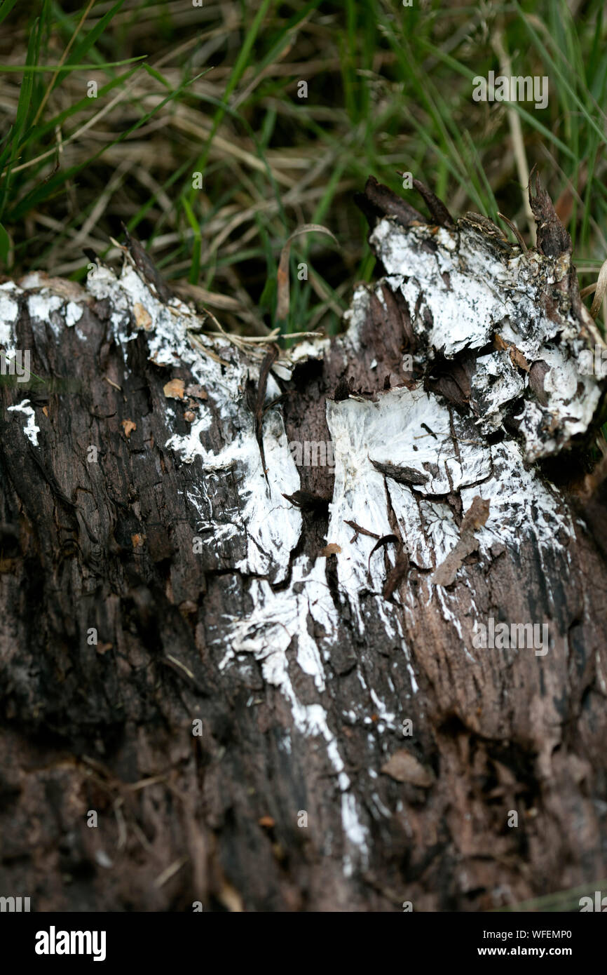 Piece of wood trunk in grass macro background fifty megapixels Stock Photo