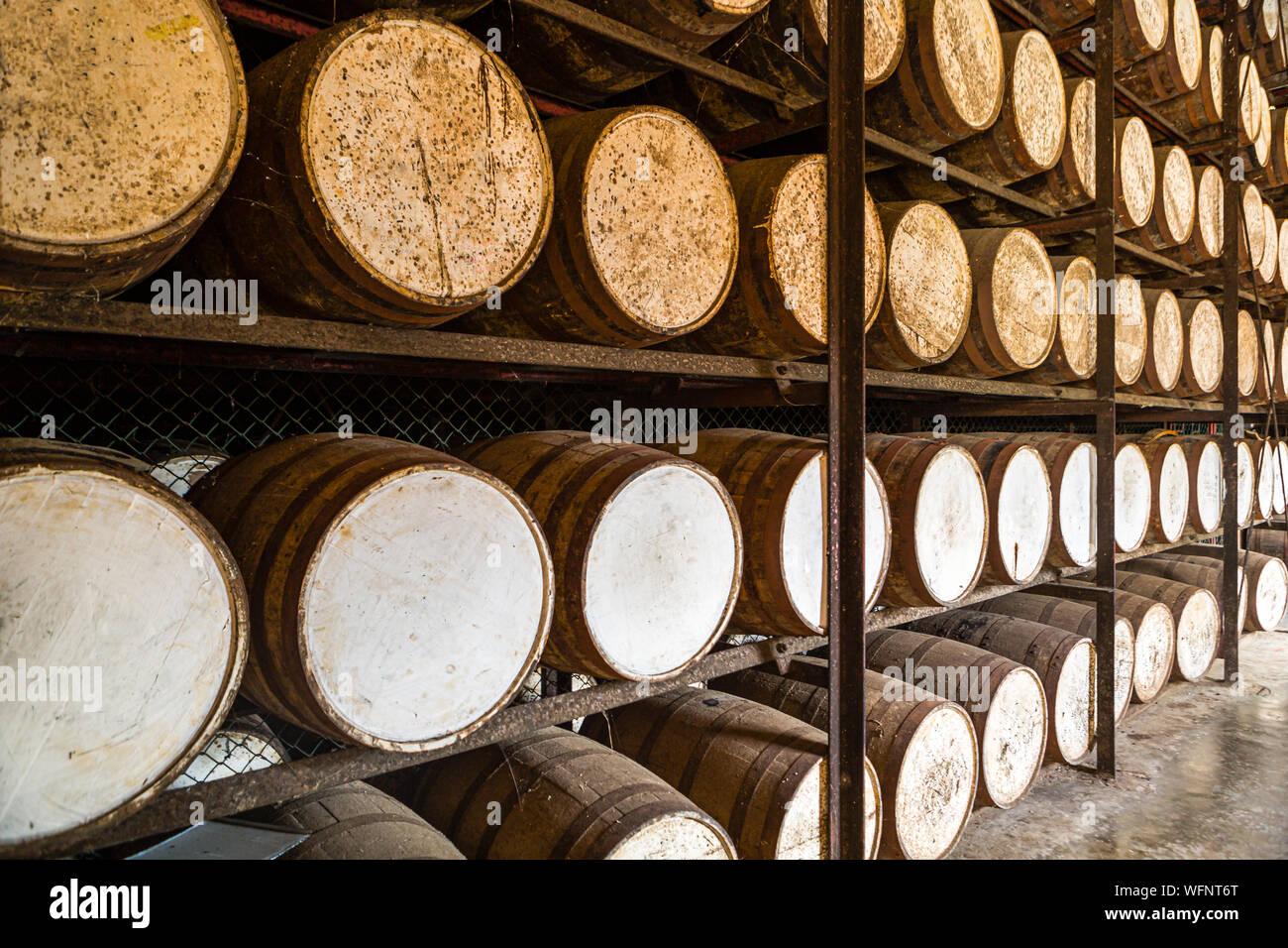 Shelves with oak rum barrels Stock Photo