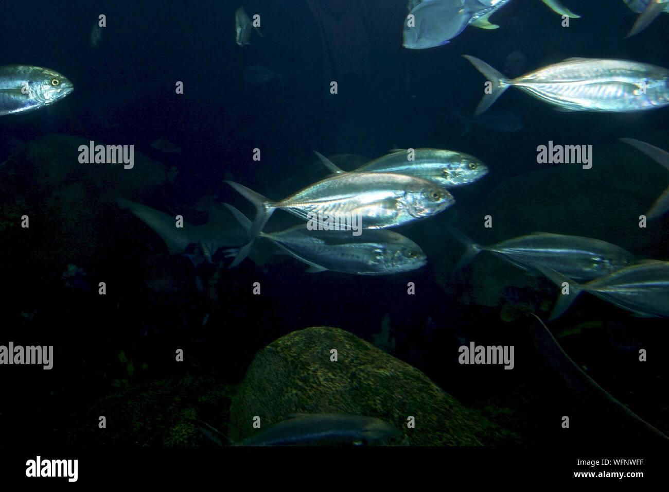 School Of Fish Swimming In Sea Stock Photo