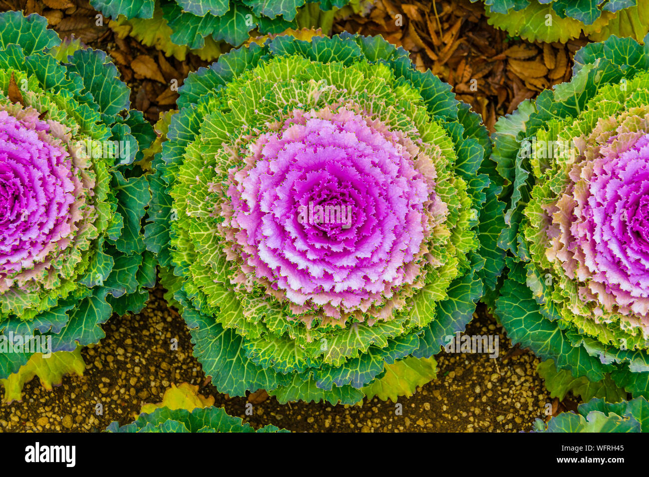 High angle shot colorful exotic radial flowers at urban ... on symmetrical garden design, linear garden design, vertical garden design, asymmetrical garden design, rectangular garden design,