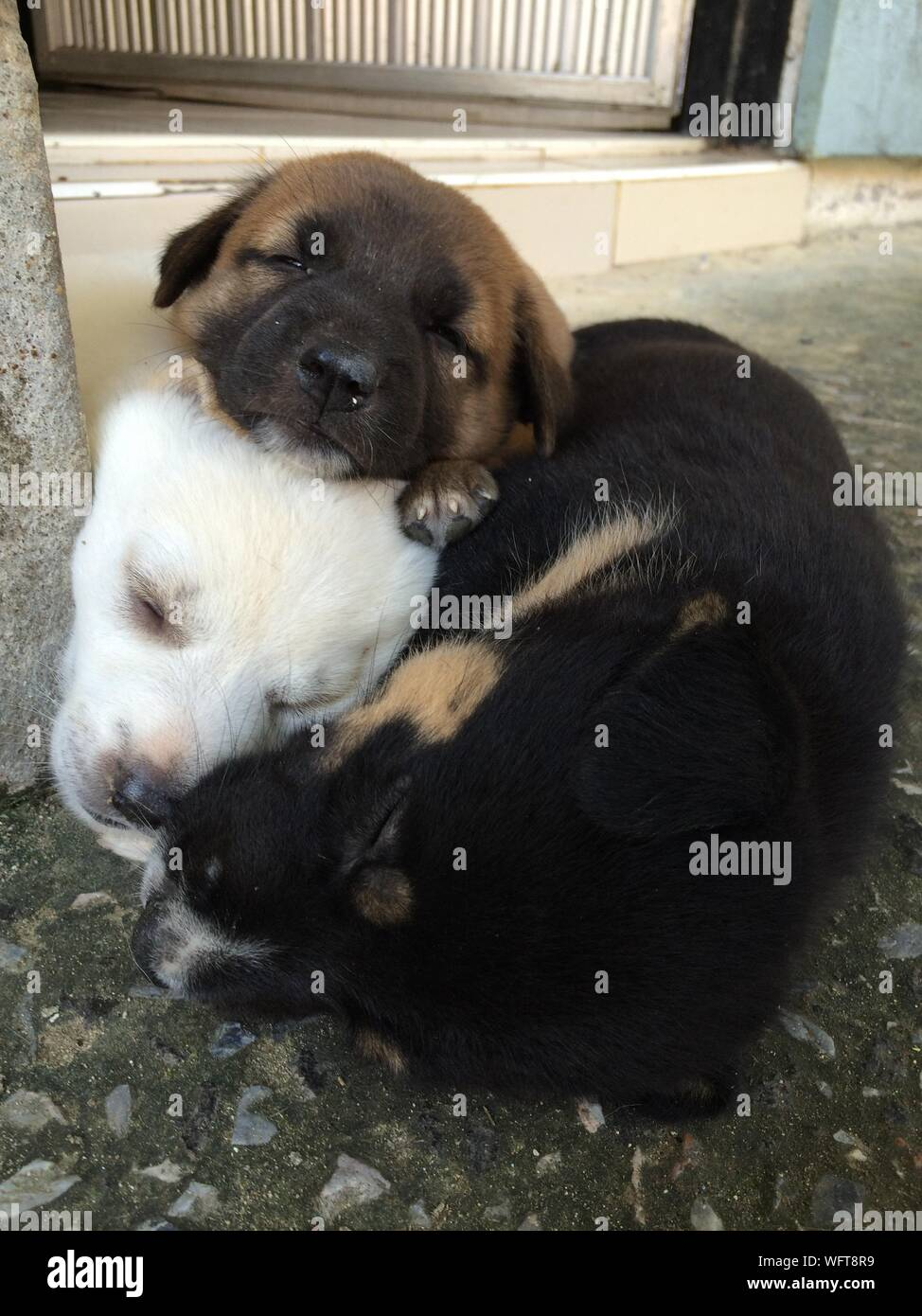 Close-up Of Dogs Sleeping Outdoors Stock Photo